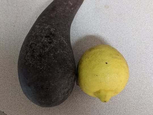"""""""There's nothing like homemade guacamole when you've grown your own avocados,"""" said Roger Kane."""