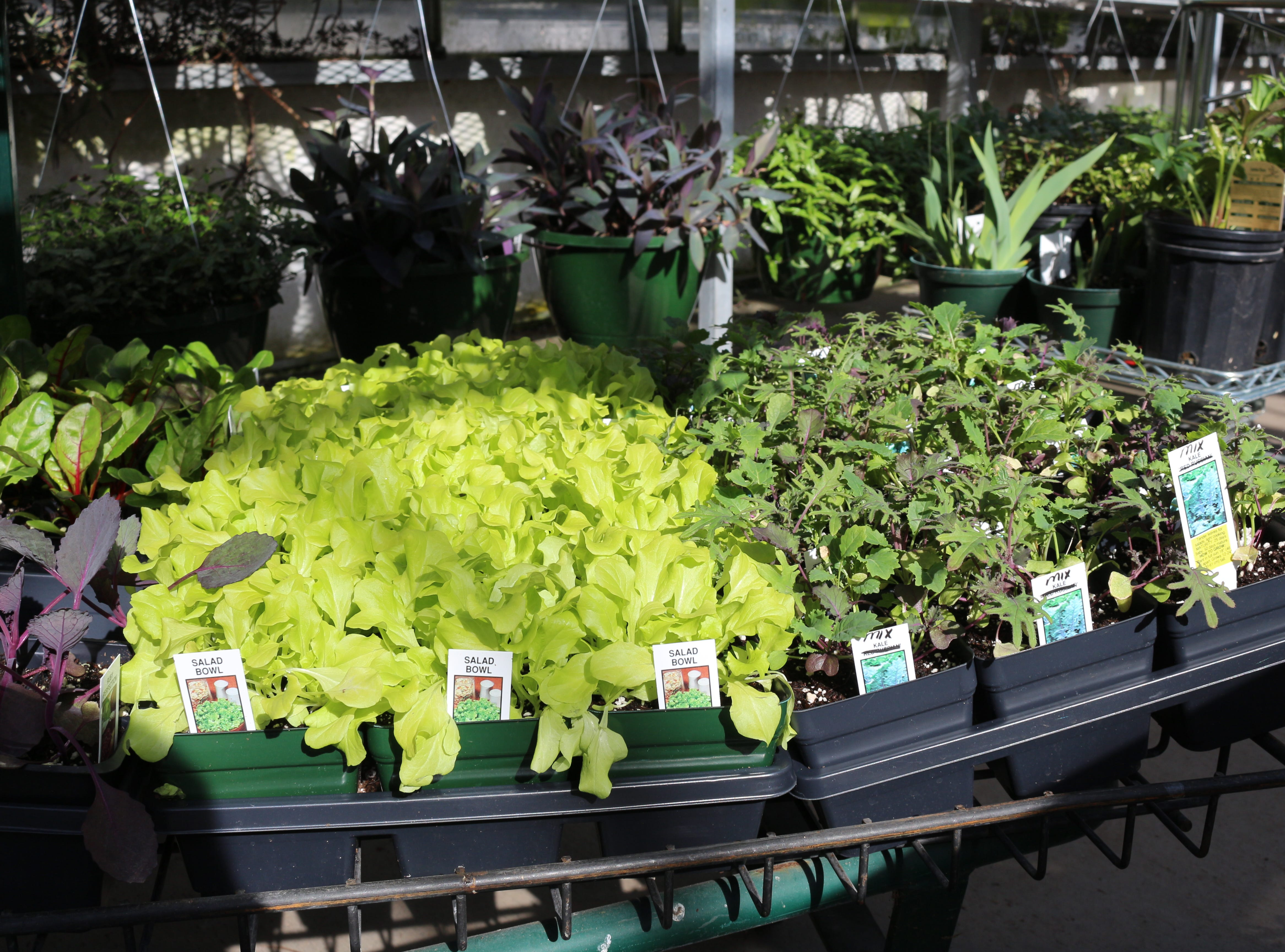 Need to chat with a plant whisperer in person? In March, April, May and June, Stanley's Greenhouse will be open Sundays from noon to five, in addition to their usual weekly hours.