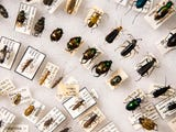 UT professor of entomology Jerome Grant explains how recent weather will affect local insects.