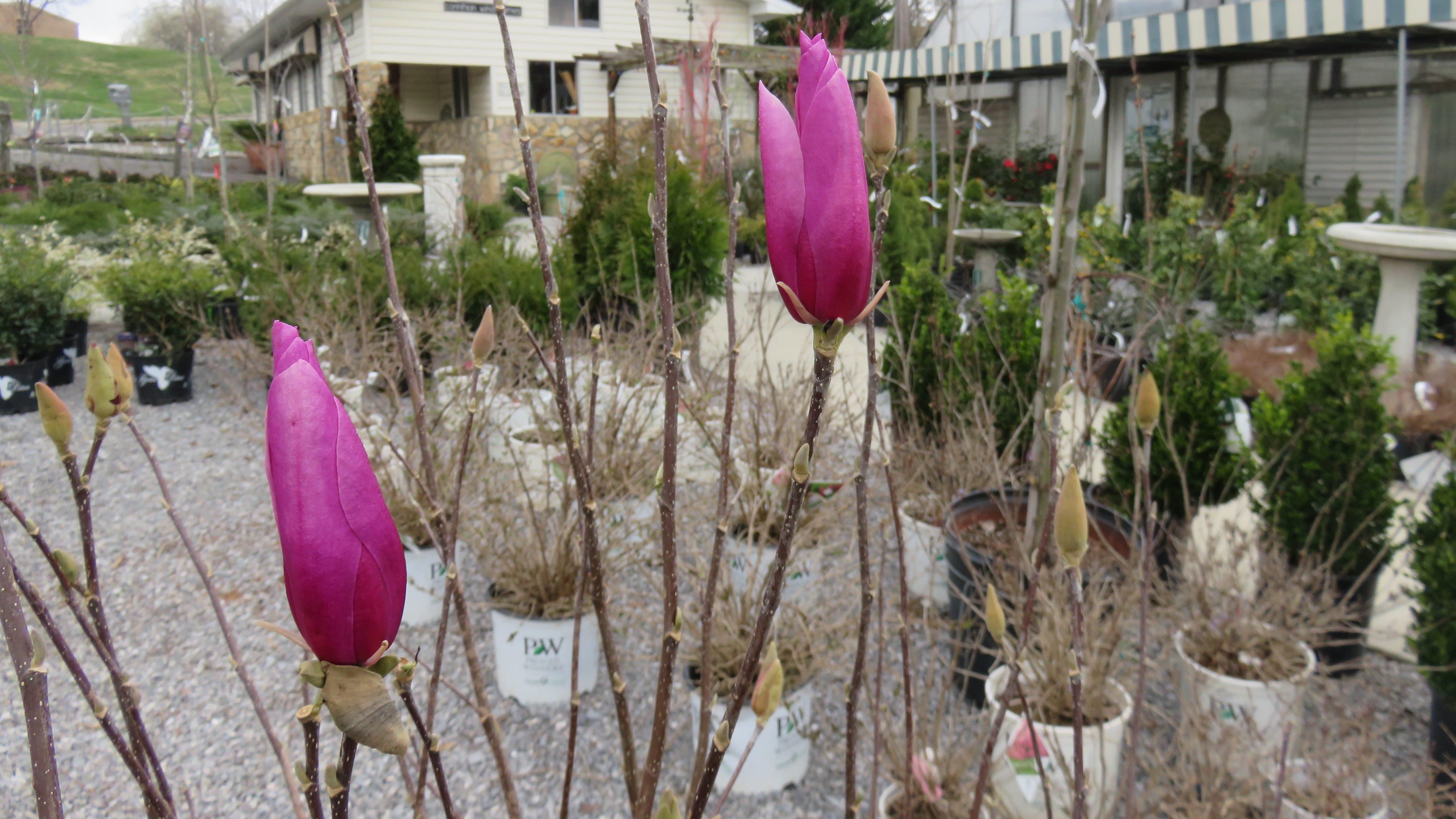 Shopper News blog: Ellenburg's nursery helps West Knox bloom