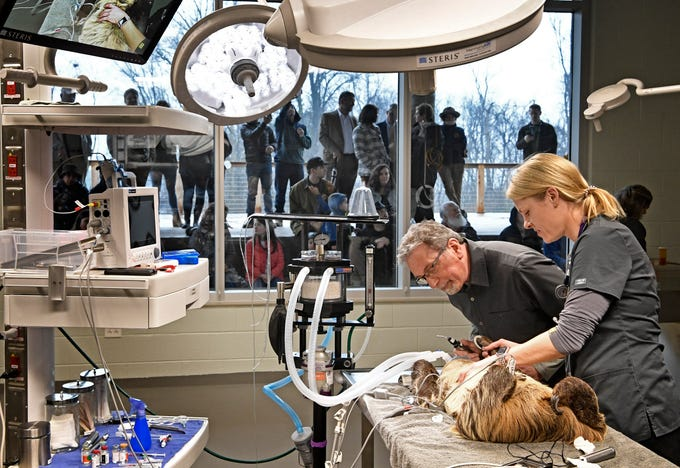 Dr. Heather Robertson, Dir. of Veterinary Services, and Dr. Louis Laratta do a check-up on a sloth at the new 23,000 square-foot HCA Healthcare Veterinary Center at the Nashville Zoo. The public is able to view procedures through a window and also on a large screen outside the operating room. Friday, March 8, 2019, in Nashville, Tenn.