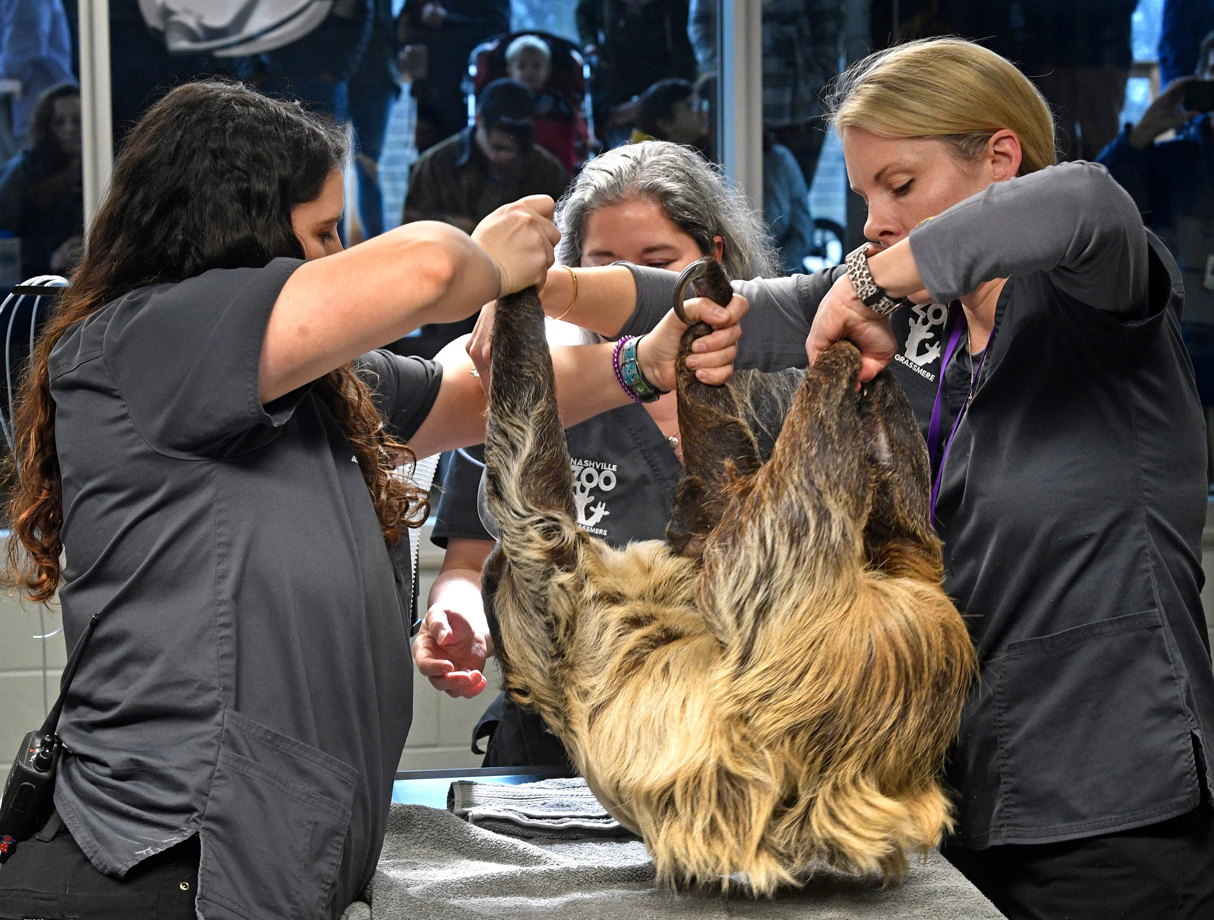 Staff place a sloth on a table to be examined at the new 23,000 square-foot HCA Healthcare Veterinary Center at the Nashville Zoo.