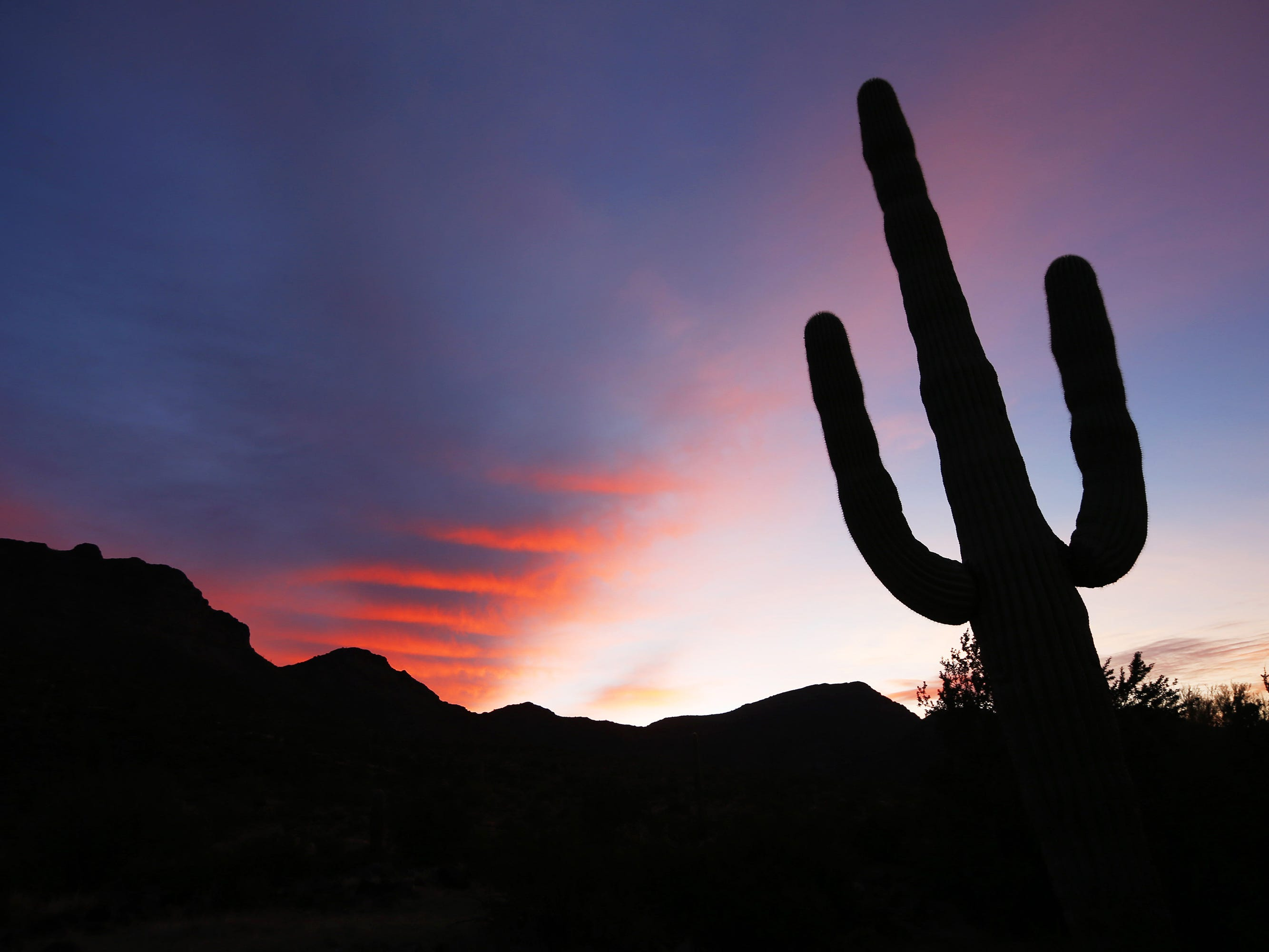The sun rises over a  Saguaro cactus at in the Cabeza Prieta National Wildlife Refuge in southern Arizona on February 19, 2015.