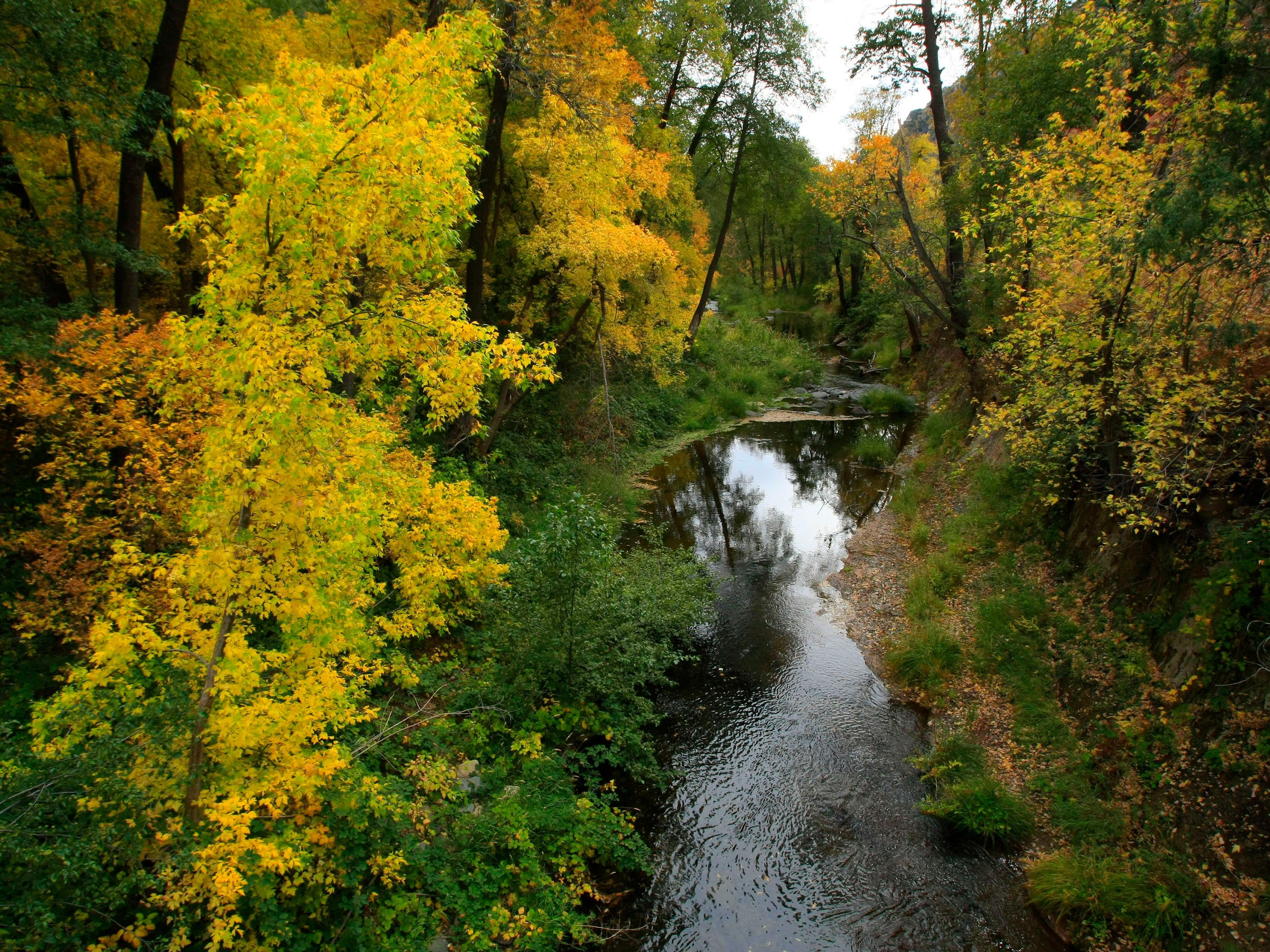 Autumn colors sweep through Oak Creek Canyon on the West Fork Trail north of Sedona.