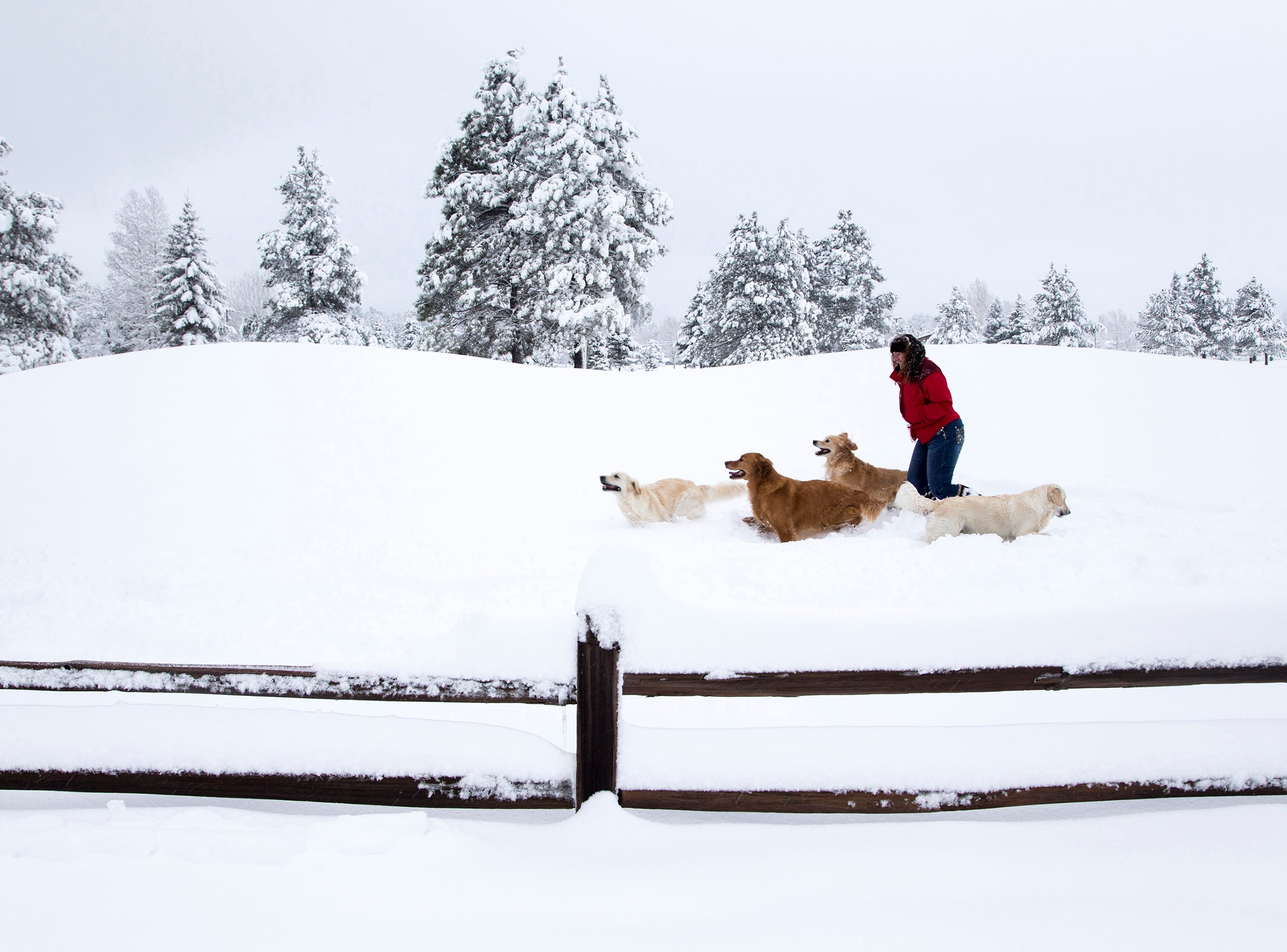 Sandy Smith, of Chandler, and her dogs, Wriley, Abbey, Bailey and Bella play in the snow in Munds Park, Arizona  on January 6, 2016,