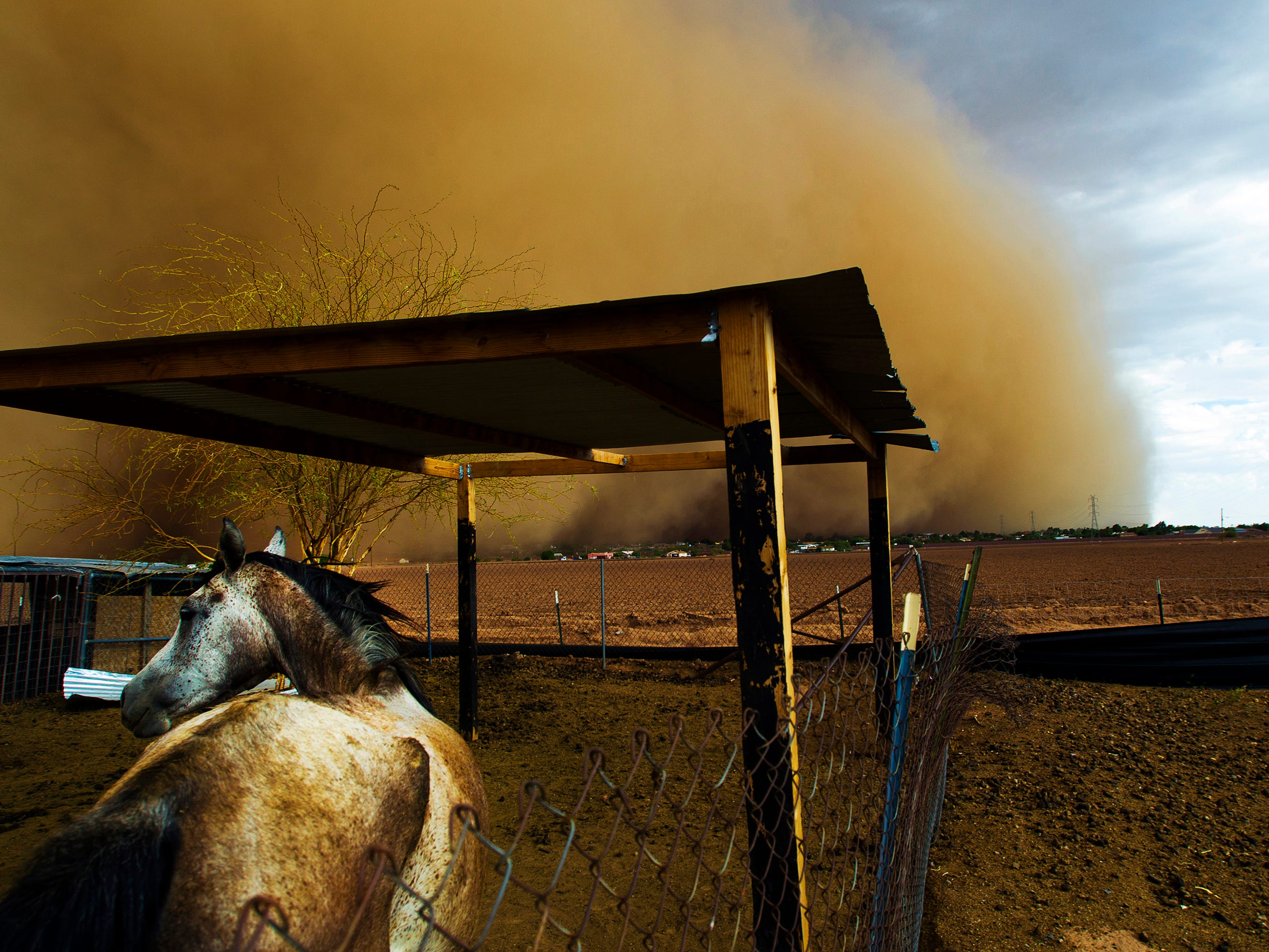 A haboob blows in over a horse on the Salt River Indian Reservation July 21, 2012. The wall of dust is a result of air pushed forward by the front of a thunderstorm cell, dragging dust and debris with it, as it travels across the terrain.