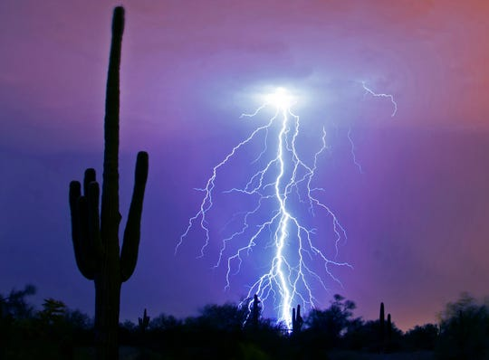 Lightning strikes over saguaros during a monsoon storm in east Mesa July 26, 2014.