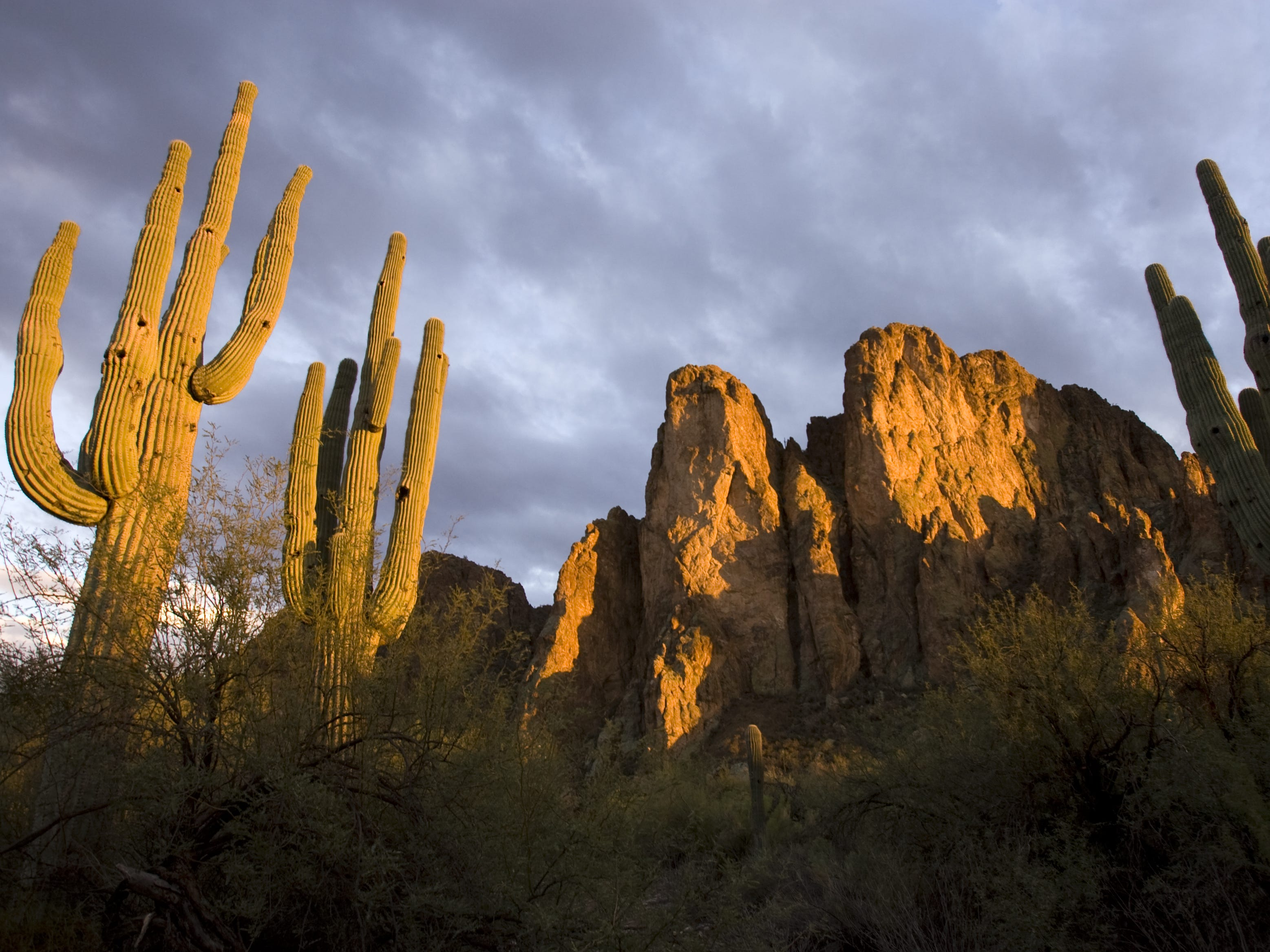 Saguaros frame the Bulldog Cliffs in the early evening light at the Saguaro Lake Ranch Resort off of Bush Highway  in unincorporated Maricopa County on December 8, 2007.