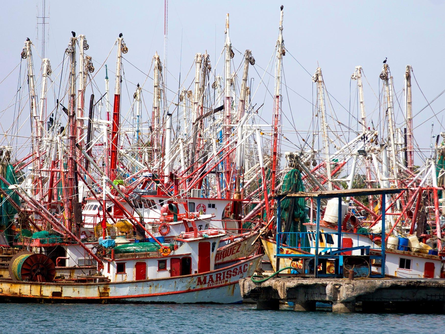Shrimp boats are docked in Puerto Penasco, Mexico. Shrimp season is from September to mid-April.