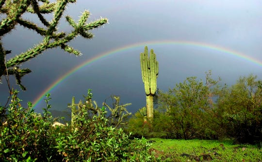 A full rainbow arches over a saguaro cactus in the Scottsdale desert after a rain shower.
