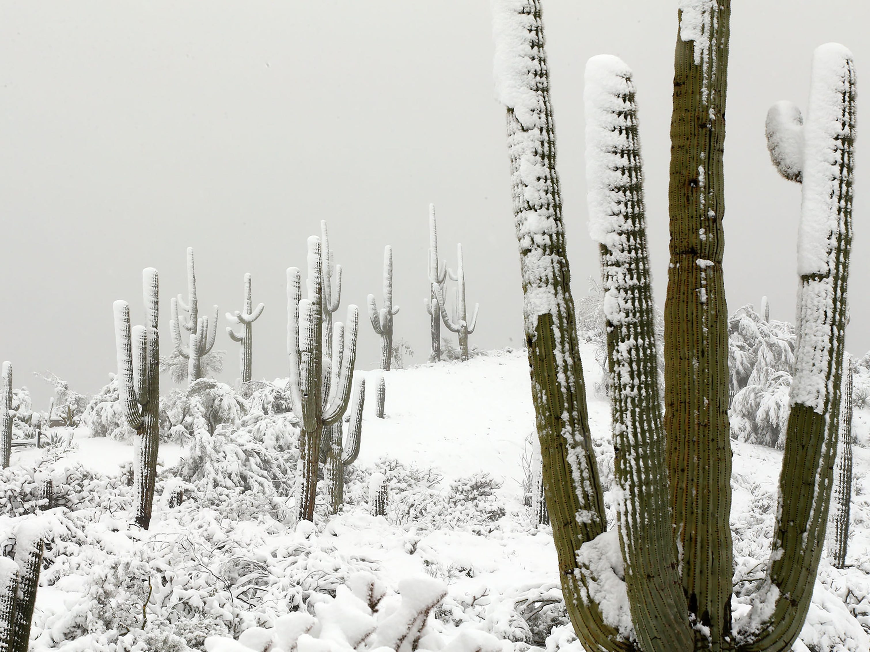A powerful winter storm brought six inches of snow to the area around Pinnacle Peak on Feb. 22, 2019 in Scottsdale, Ariz.