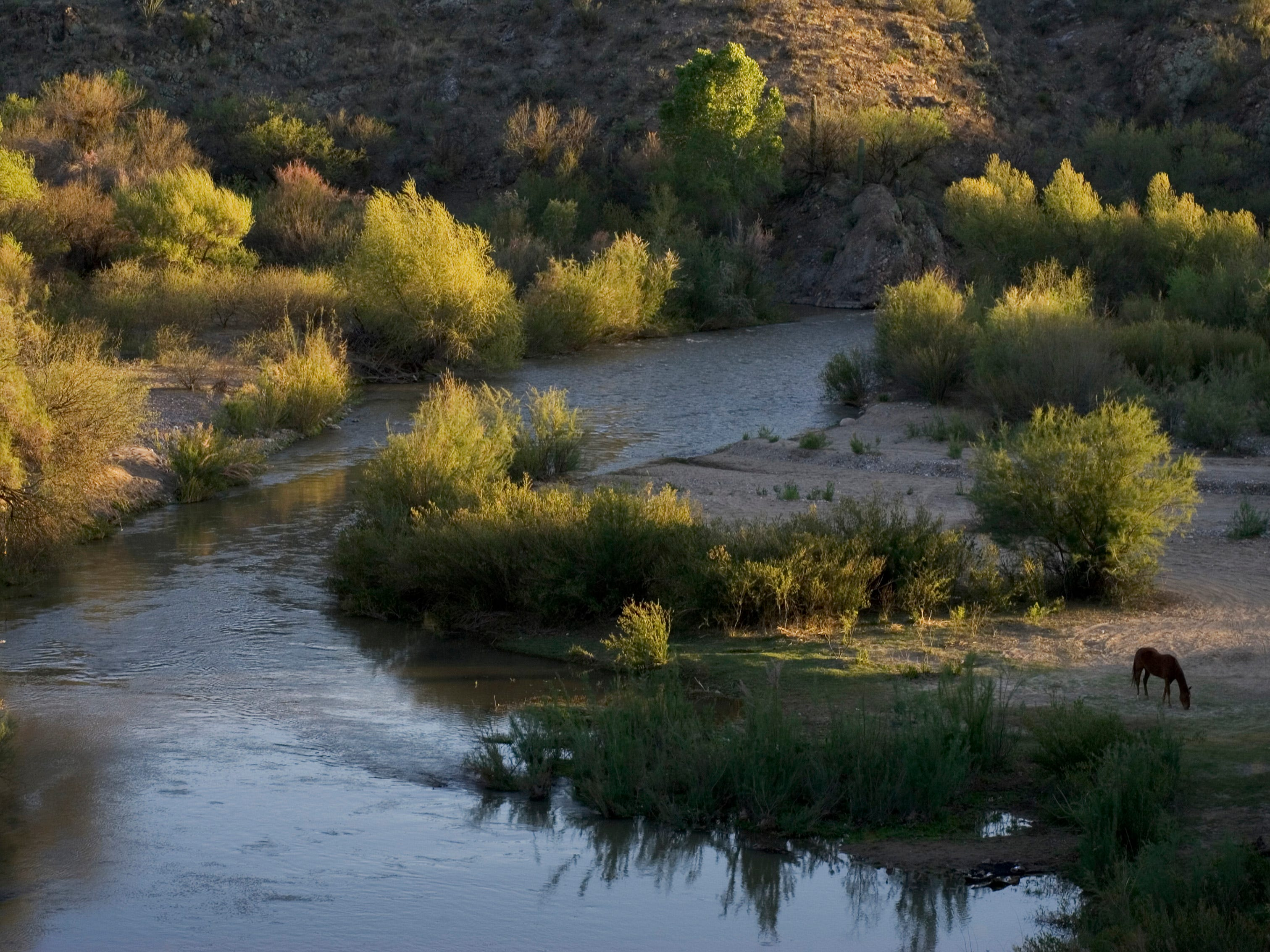 A horse grazes next to the Gila River on April 12, 2006.
