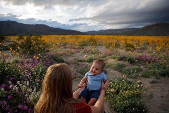 "In this Wednesday, March 6, 2019, photo, Rene Garcia holds her three-month-old son Brandon amid wildflowers in bloom near Borrego Springs, Calif. Two years after steady rains sparked seeds dormant for decades under the desert floor to burst open and produce a spectacular display dubbed the ""super bloom,"" another winter soaking this year is shaping up to be possibly even better."