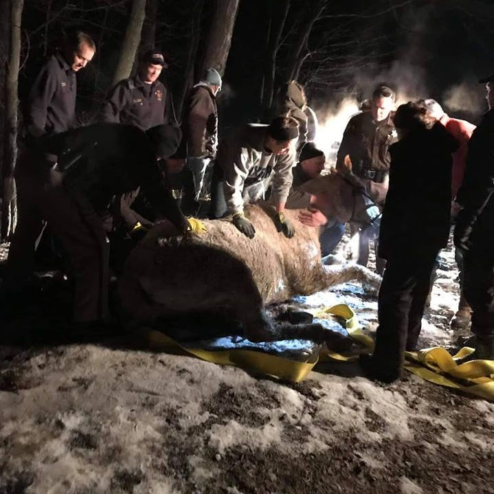Oxford firefighters, Oakland Co. deputies rescue horse trapped under ice