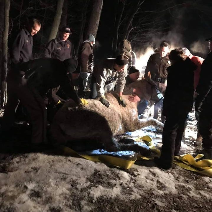 Horse trapped in ice rescued in Oxford