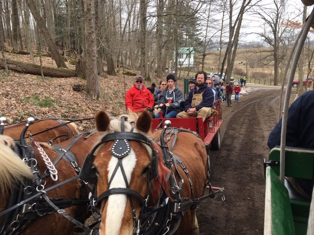 Malabar Farm Maple Syrup Festival featured horse-drawn wagon rides, a look at syrup making and plenty of food and fresh air Saturday.