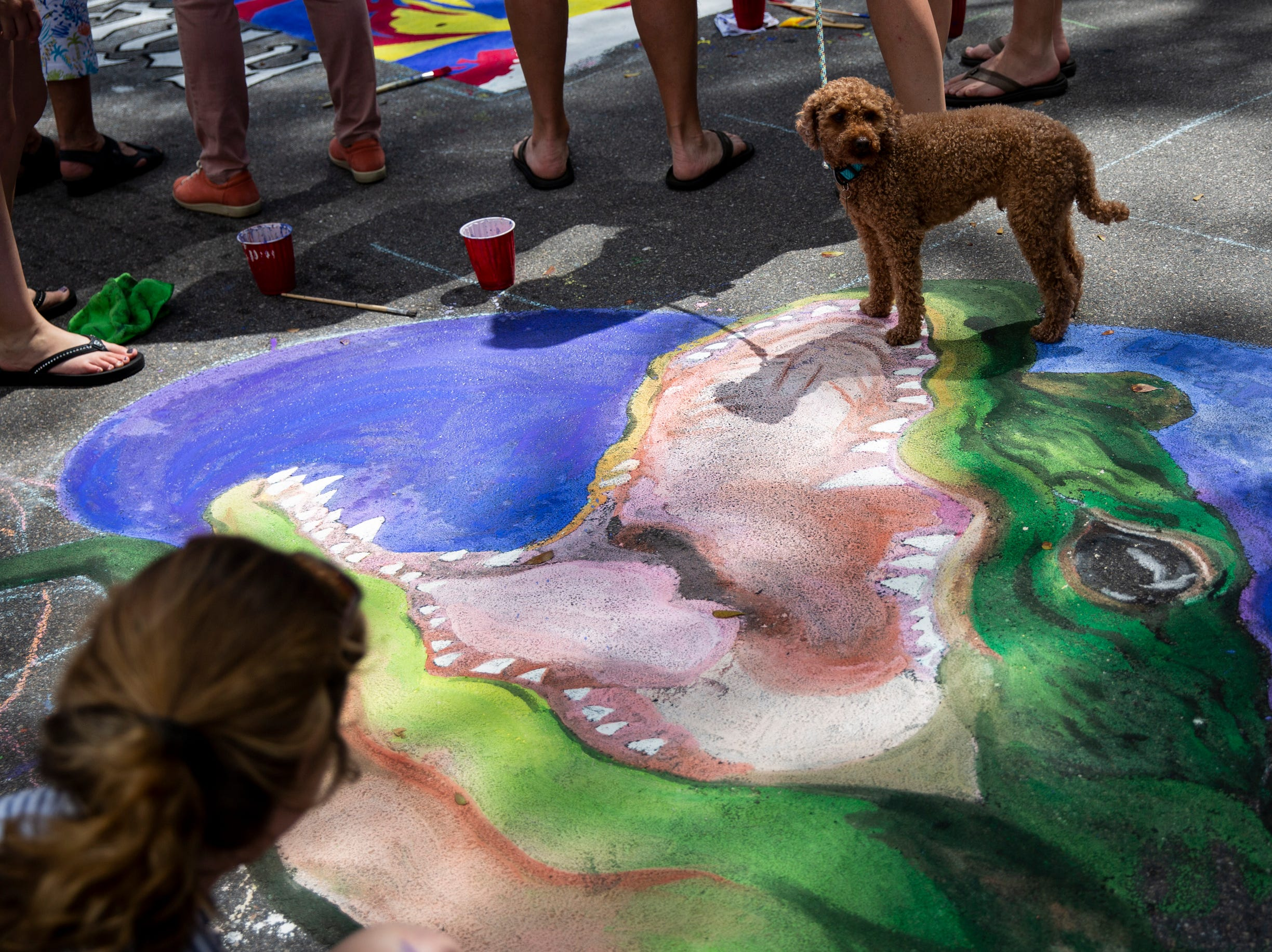 George the dog walks into the mouth of Sarah Jane Post's chalk alligator during the Naples Chalk Art festival on Fifth Avenue South on Saturday, March 9, 2019.