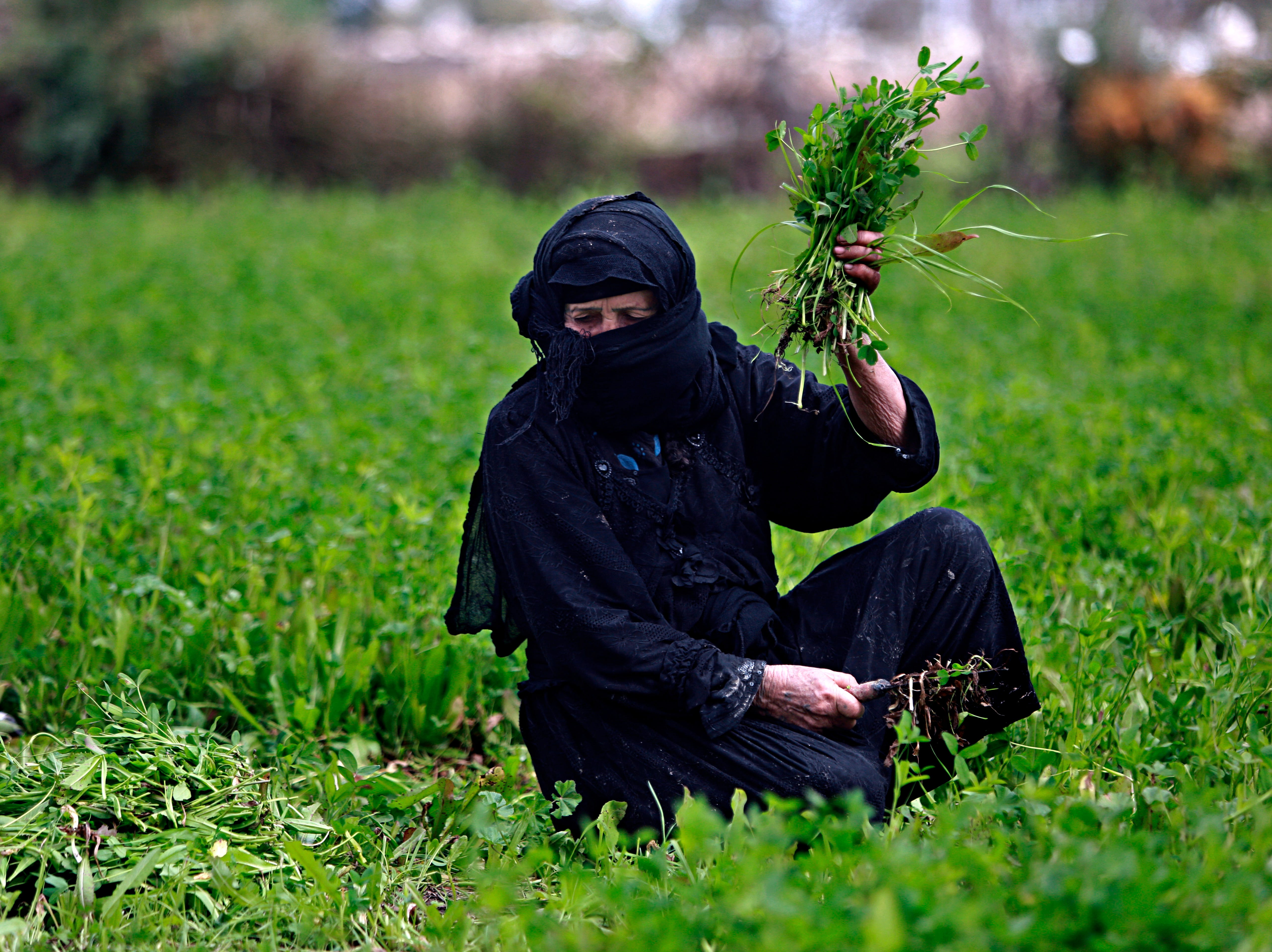 An Iraqi woman works in a vegetable field, as the world celebrates International Women's, on the outskirts of Baghdad, Iraq, Friday, March 8, 2019. (AP Photo/Hadi Mizban)