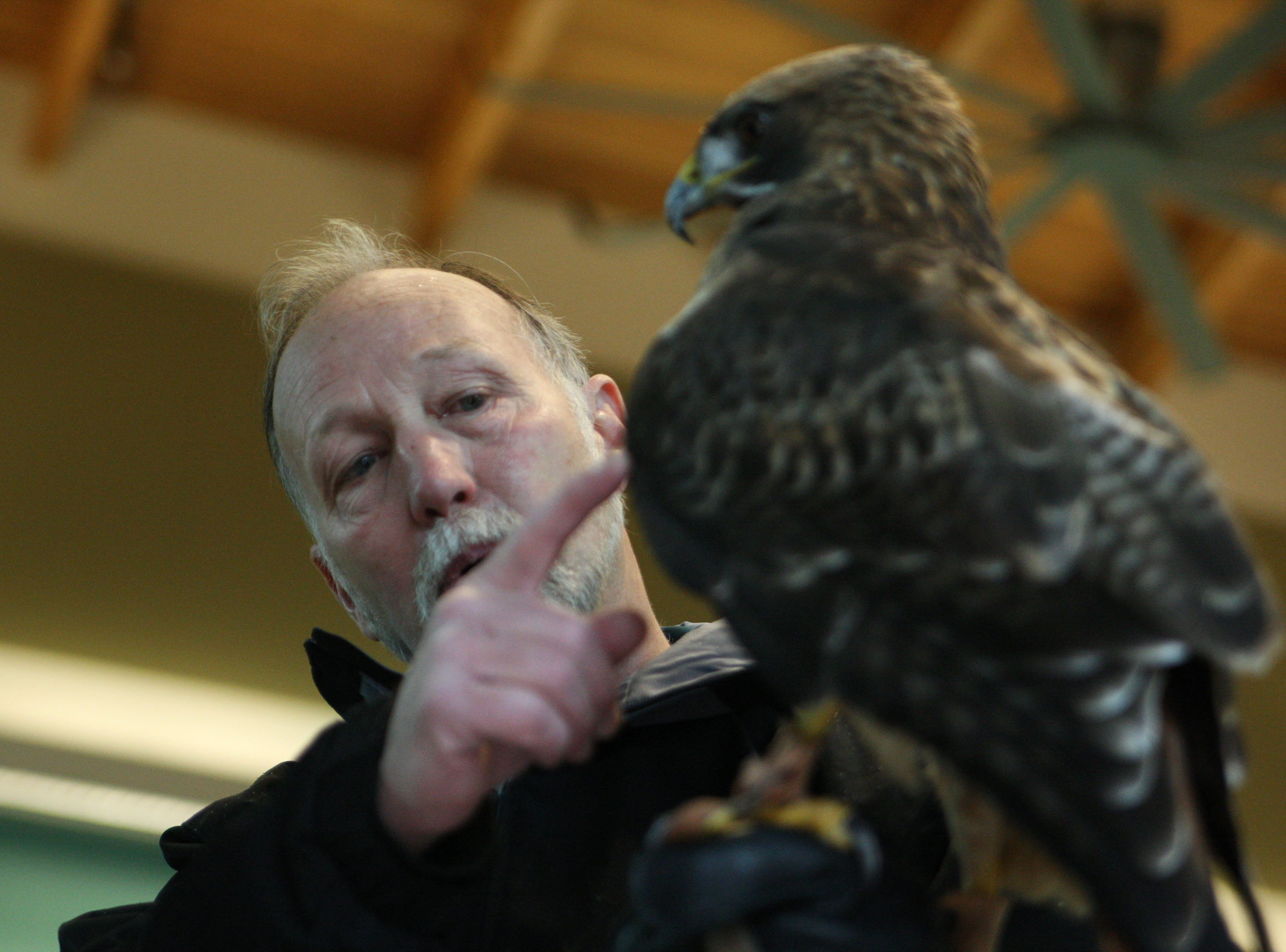 D.D.'s handler points out her wing, explaining that hawks have about 7,000 feathers on their body.