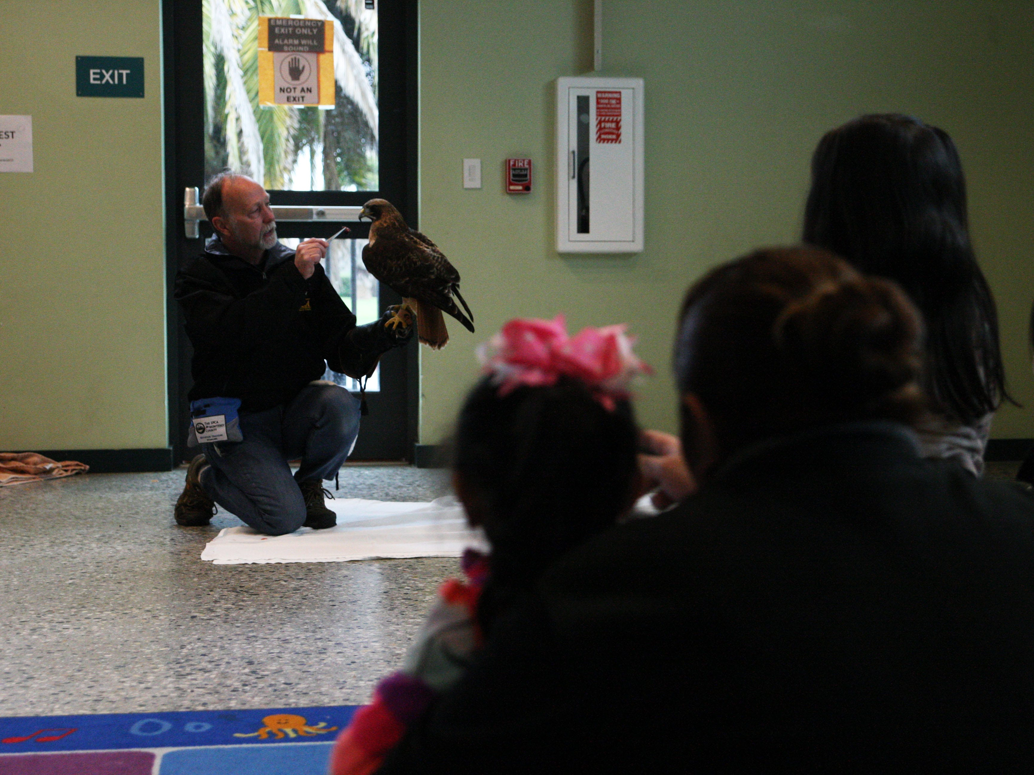 An SPCA volunteer and hawk handler kneels down with D.D. the Red-tailed Hawk. D.D. was likely hit by a car when she was about two, and has lived at the SPCA ever since.