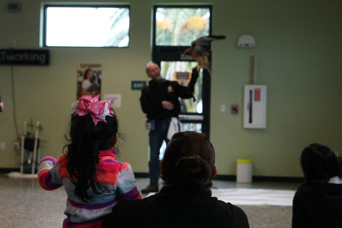 A girl and her mother watch D.D. the Red-tailed Hawk spread her wings. D.D. has been with the SPCA for 12 years and routinely appears in schools and educational events.