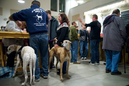 New Jersey Greyhound Adoption Program (NJGAP) will host a Meet & Greet at Lone Eagle Brewing, 44 Stangl Road, Flemington,on St. Patrick's Day, Sunday, March 17.