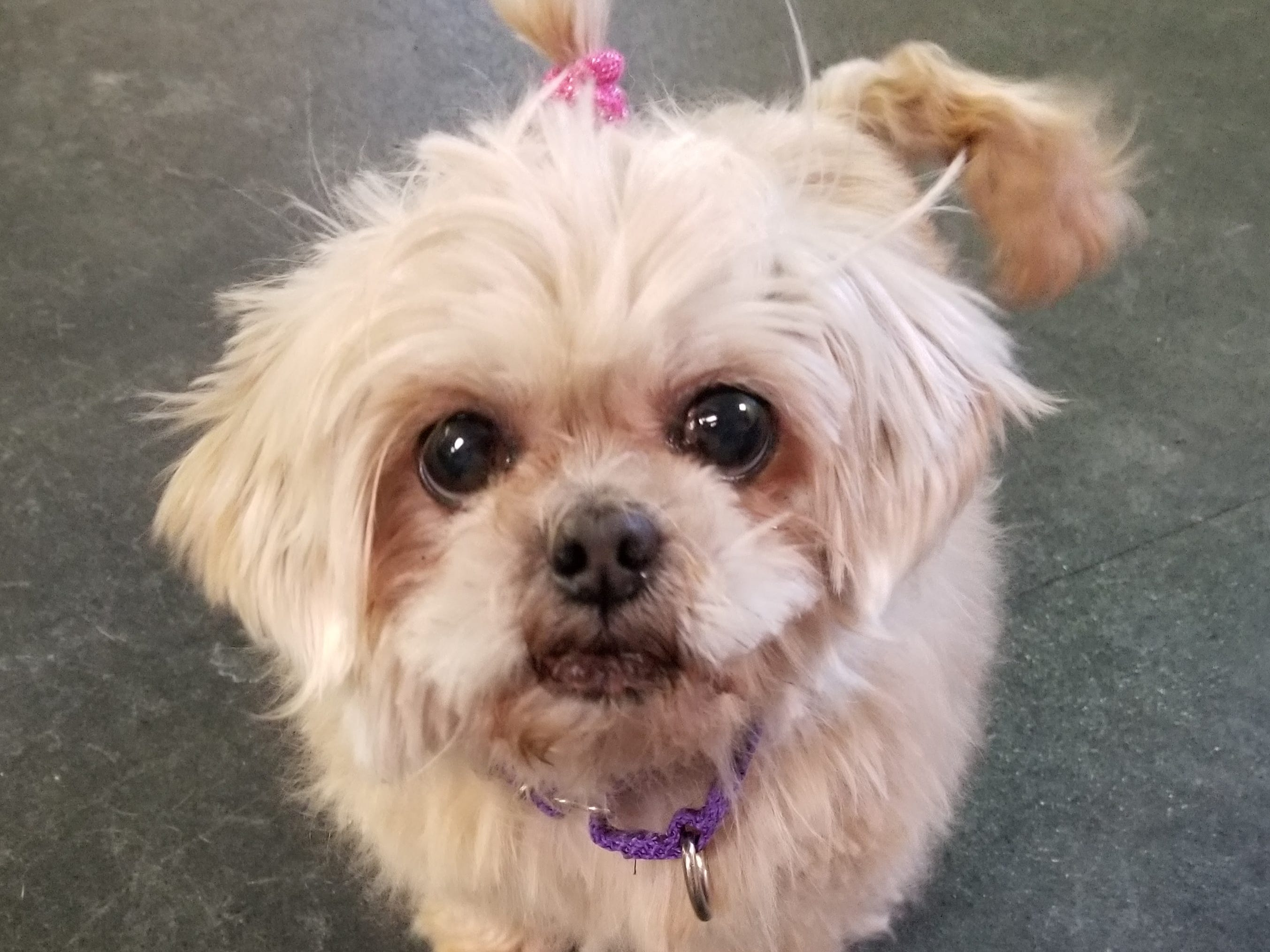 Camilla, a 9-year-old mixed breed, is super sweet and excited for a forever family. She is spayed.