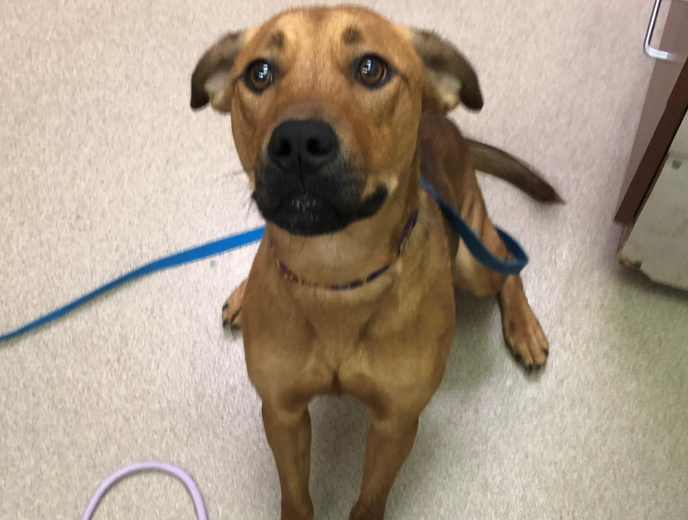 Gretchen, a 2-year-old mixed breed, loves long walks and playing. She is spayed.