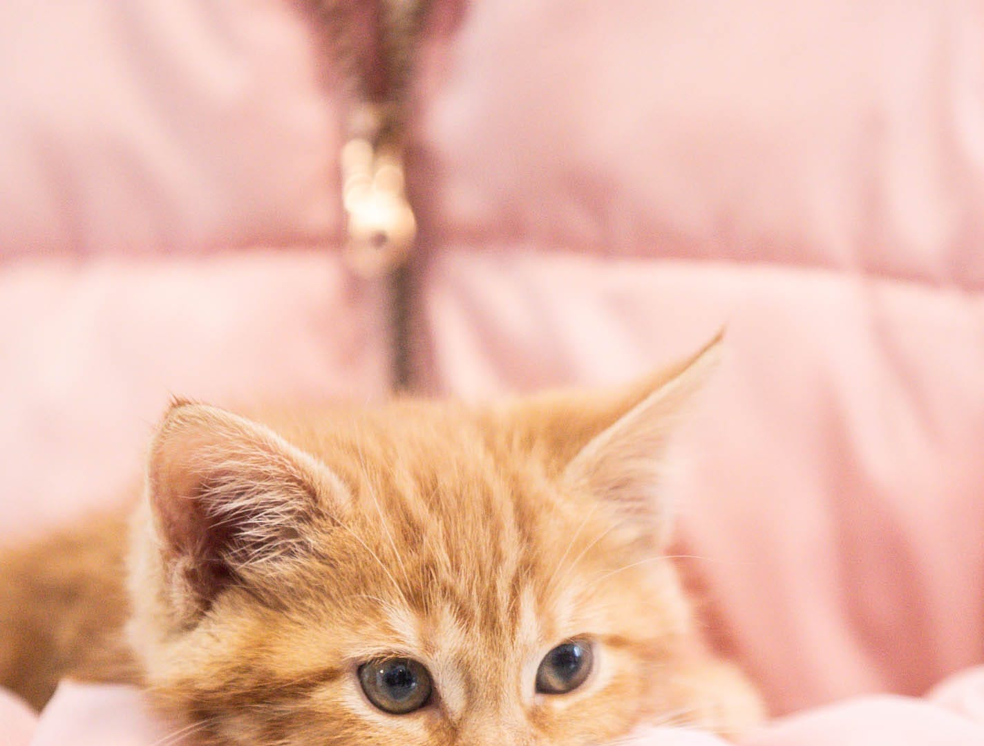 Ava Versaw cuddles a orange kitten at Indy Humane during their Puppy and Kitten Baby Shower on Sunday, March 10, 2019. The event educates families on Indy Humane's foster care program, as Fosters are needed in the spring during puppy and kitten season.