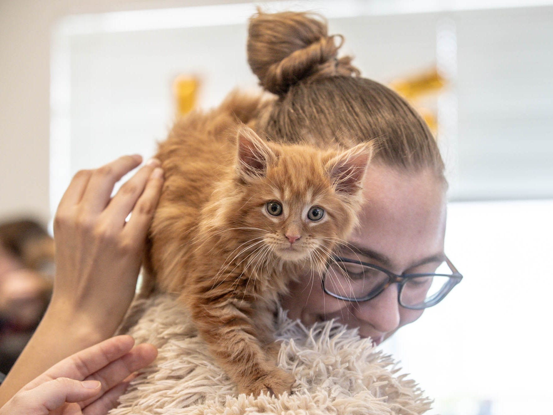 An orange kitten climbs Rhiannon Schilling at Indy Humane during their Puppy and Kitten Baby Shower on Sunday, March 10, 2019. The event educates families on Indy Humane's foster care program, as Fosters are needed in the spring during puppy and kitten season.