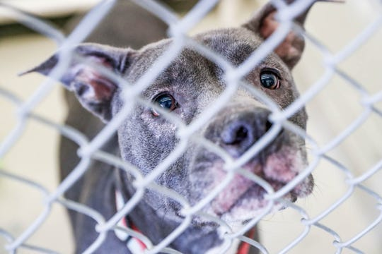 Indianapolis Animal Care Services is completely full and offering free pet adoptions through June 22.