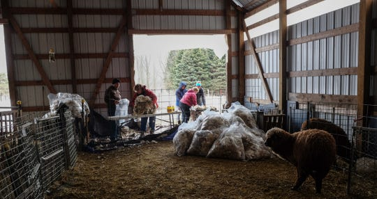 Bags of Merino wool are beginning to pile up at the Bridget Kavanagh farm in Mason Saturday, March 9, 2019.