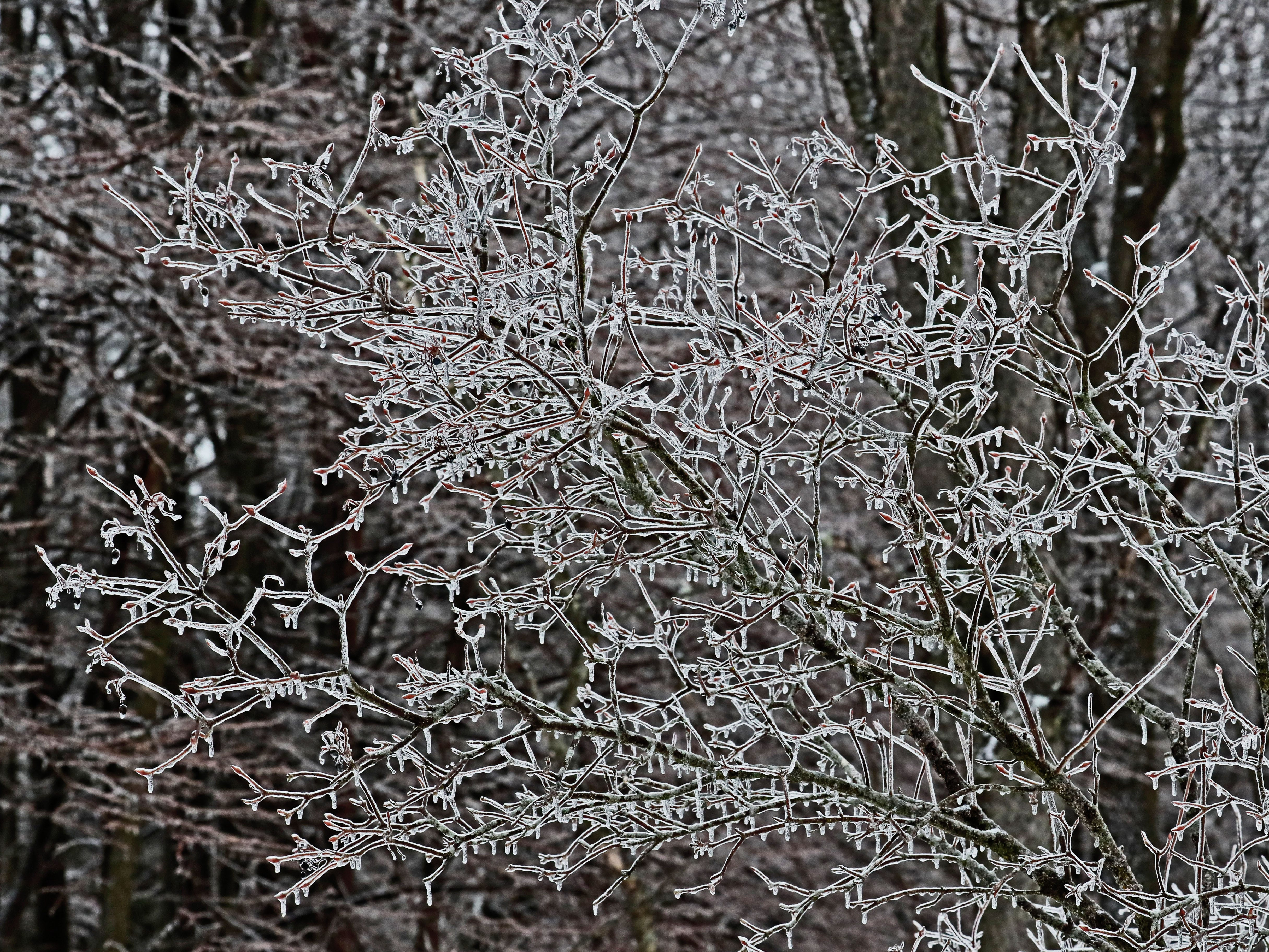 Trees are covered with ice Sunday at Kettle Moraine State Forest-Lapham Peak Unit in Delafield.