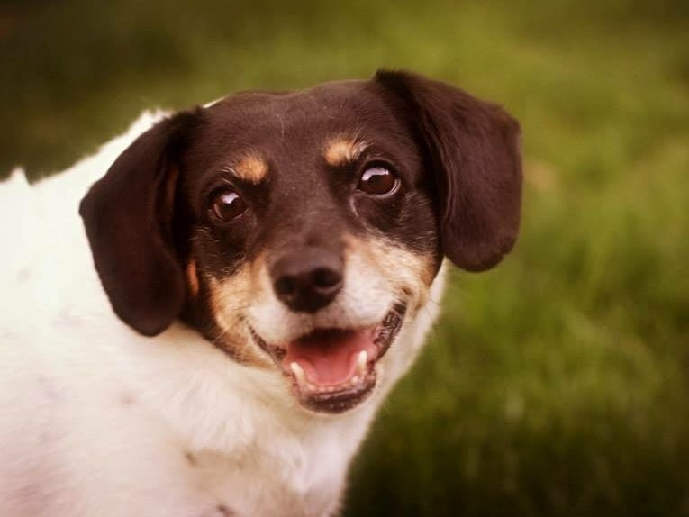 Lucy, an 11-year-old mixed breed, loves belly rubs and snuggling. She likes cats, dogs and kids and is hoping to find a home with her buddy, Rico. She is spayed.