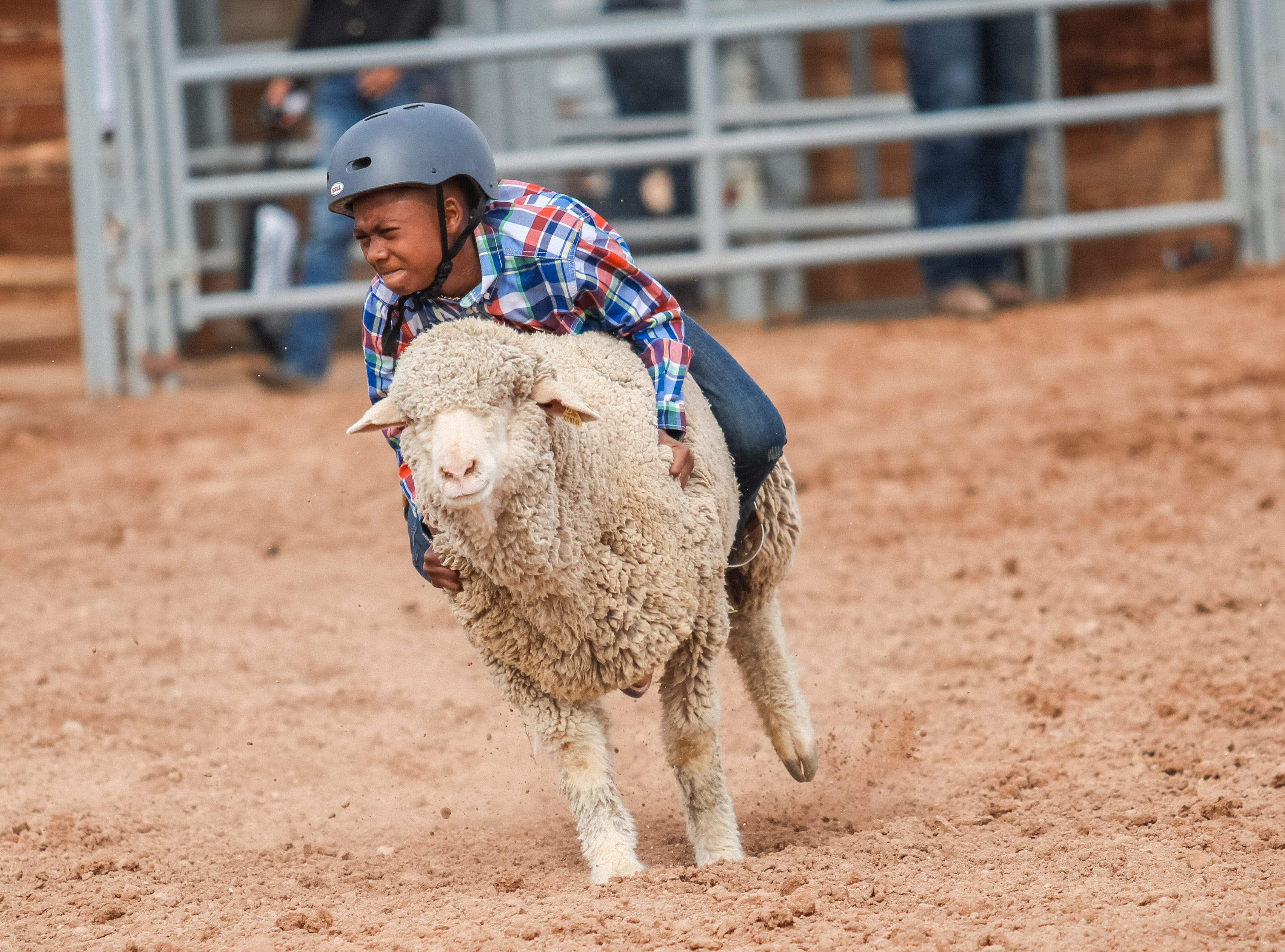 A junior competitor rides a sheep at the Arizona Black Rodeo in Chandler, Arizona on Saturday, March 9, 2019.