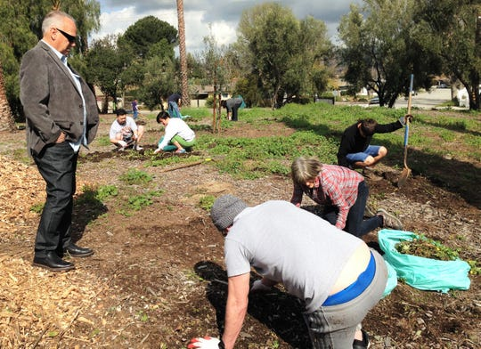 Keith L. Mashburn, mayor of Simi Valley, shows his support of volunteers pulling weeds from the front lawn at the Simi Valley Samaritan Center during Community Volunteer Day on Saturday.