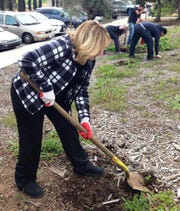 Dee Dee Cavanaugh, mayor pro-tem of Simi Valley, was among numerous volunteers who shoveled away weeds from the front lawn of the Simi Valley Samaritan Center on Saturday during Community Volunteer Day.