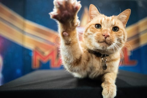 "Reggie is the furry actor who plays scene-stealing Goose the Cat in ""Captain Marvel."""