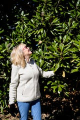 Mary Fierle looks up at the large southern magnolia tree growing in her yard March 6, 2019. The tree has been recognized by the Asheville Treasured Trees program.