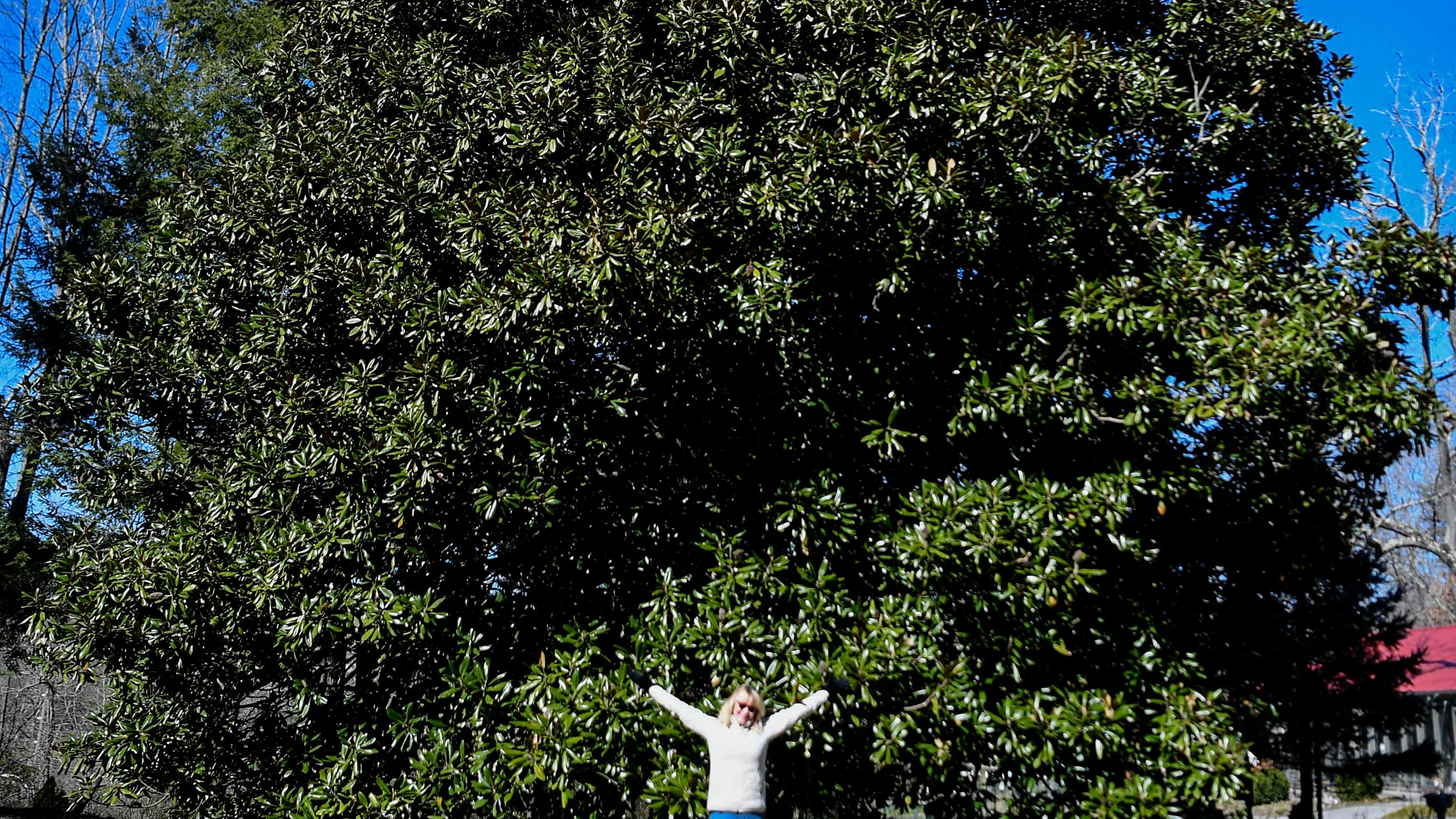 Asheville Tree Activist Move To Protect Treasured Trees Urban Forest