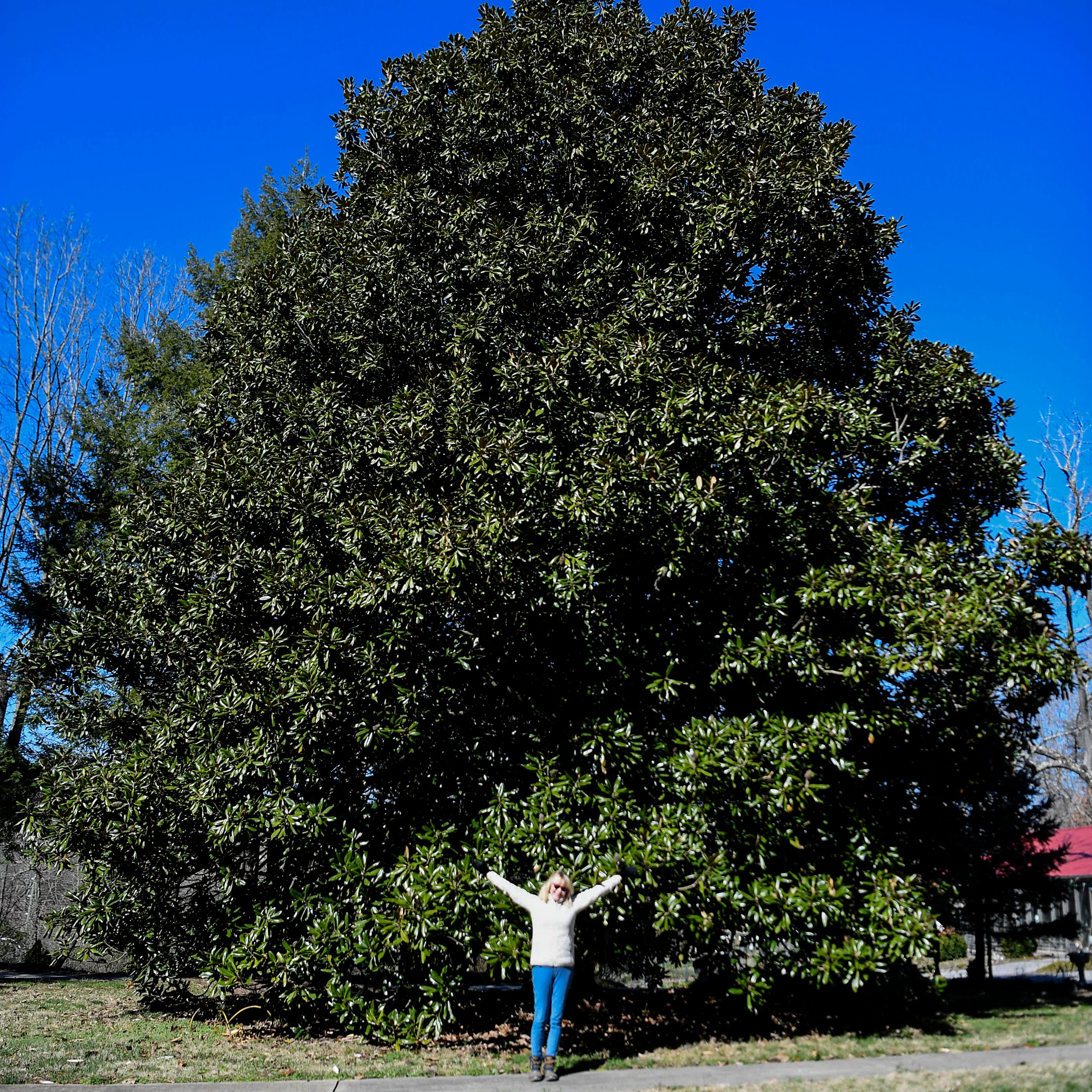 Although surrounded by forests, Asheville's tree population is in rapid decline
