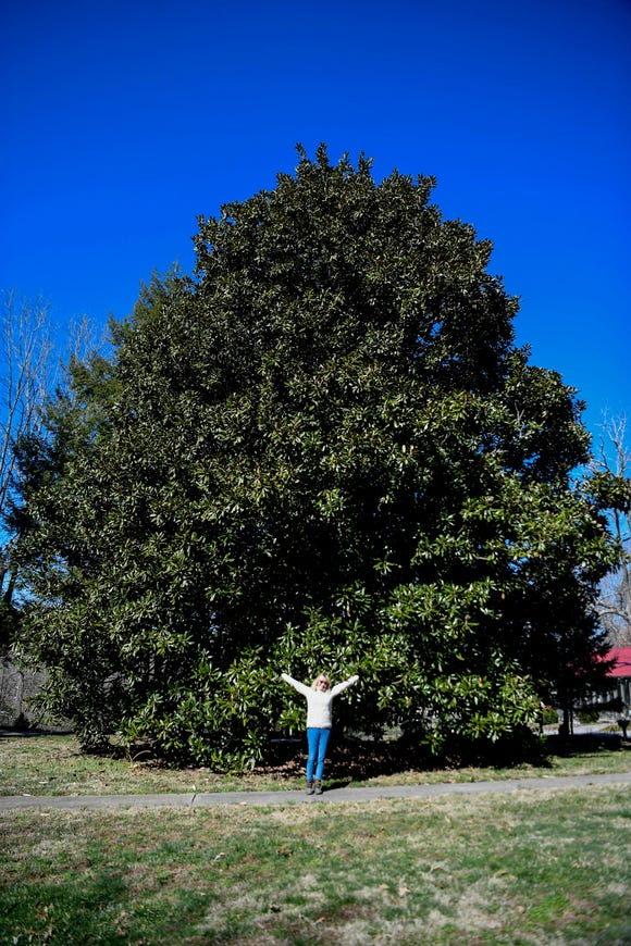 Mary Fierle is dwarfed by the southern magnolia in her yard March 6, 2019. The tree has been recognized by the Asheville Treasured Trees program.