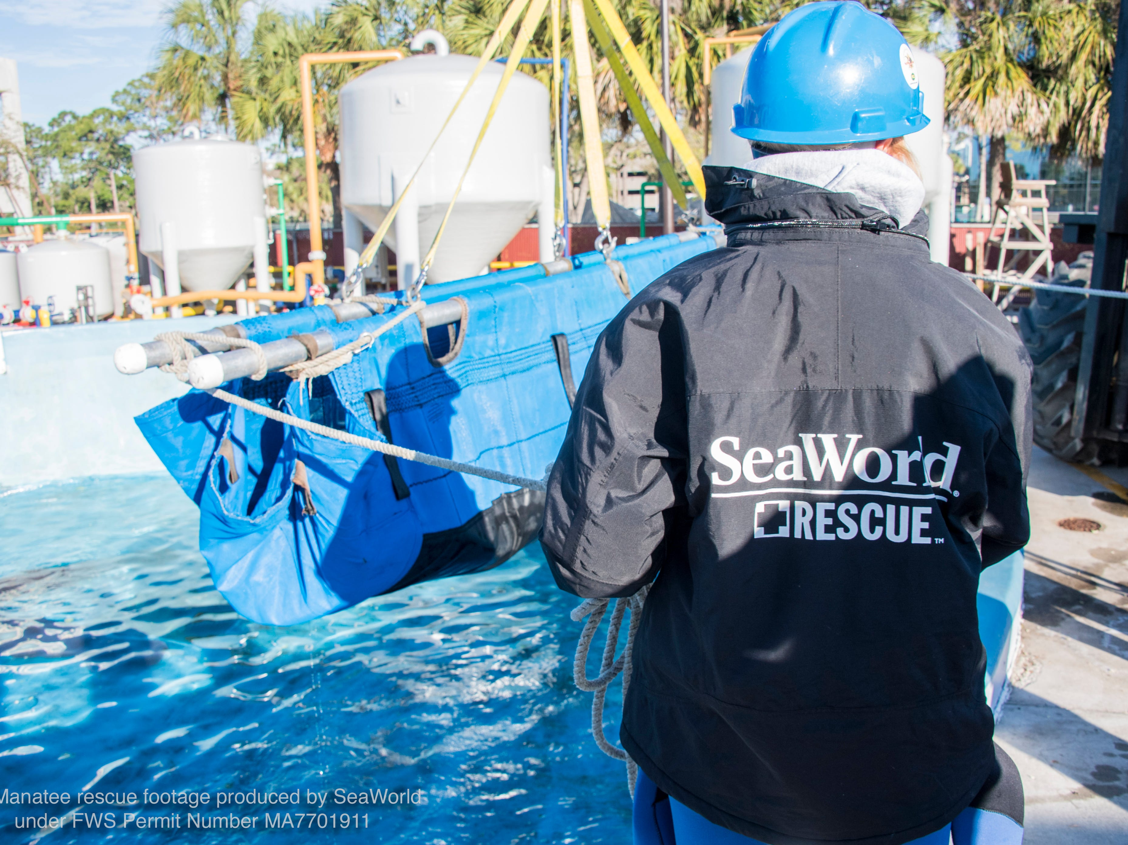 Seven rescued manatees are getting a second chance at life after months of rehabilitation, thanks to the dedicated efforts of multiple facilities in Florida.