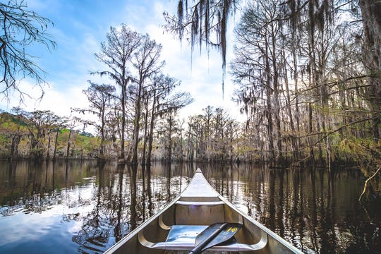 Caddo Lake State Park is a 25,400-acre mosaic of swamps, ponds and bayous, and is the only natural lake in Texas. (Travel Texas/TNS)