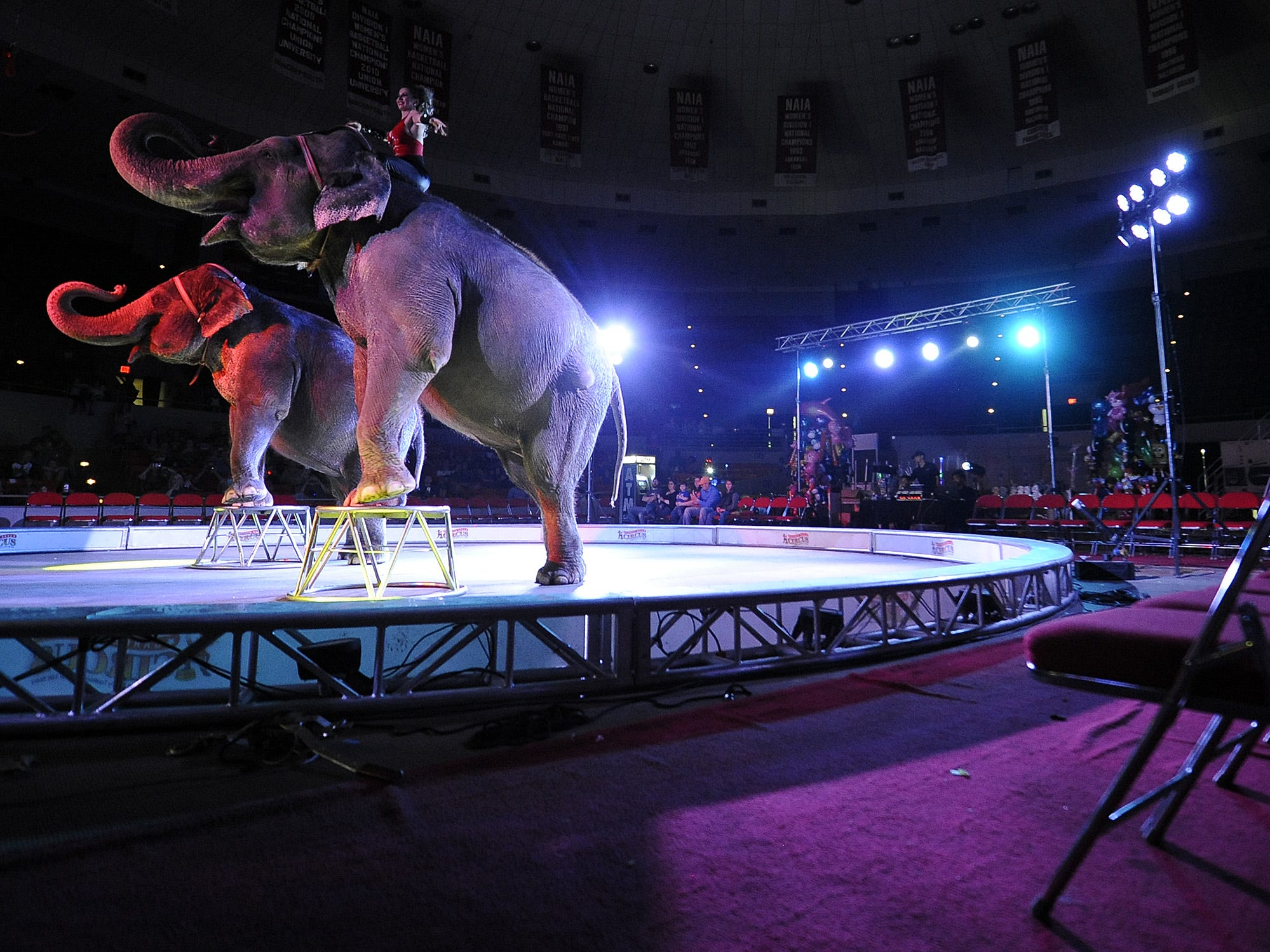 Elephants perform during the Garden Bros Circus at Oman Arena in Jackson, Tennessee, on Wednesday, Feb. 22, 2017.