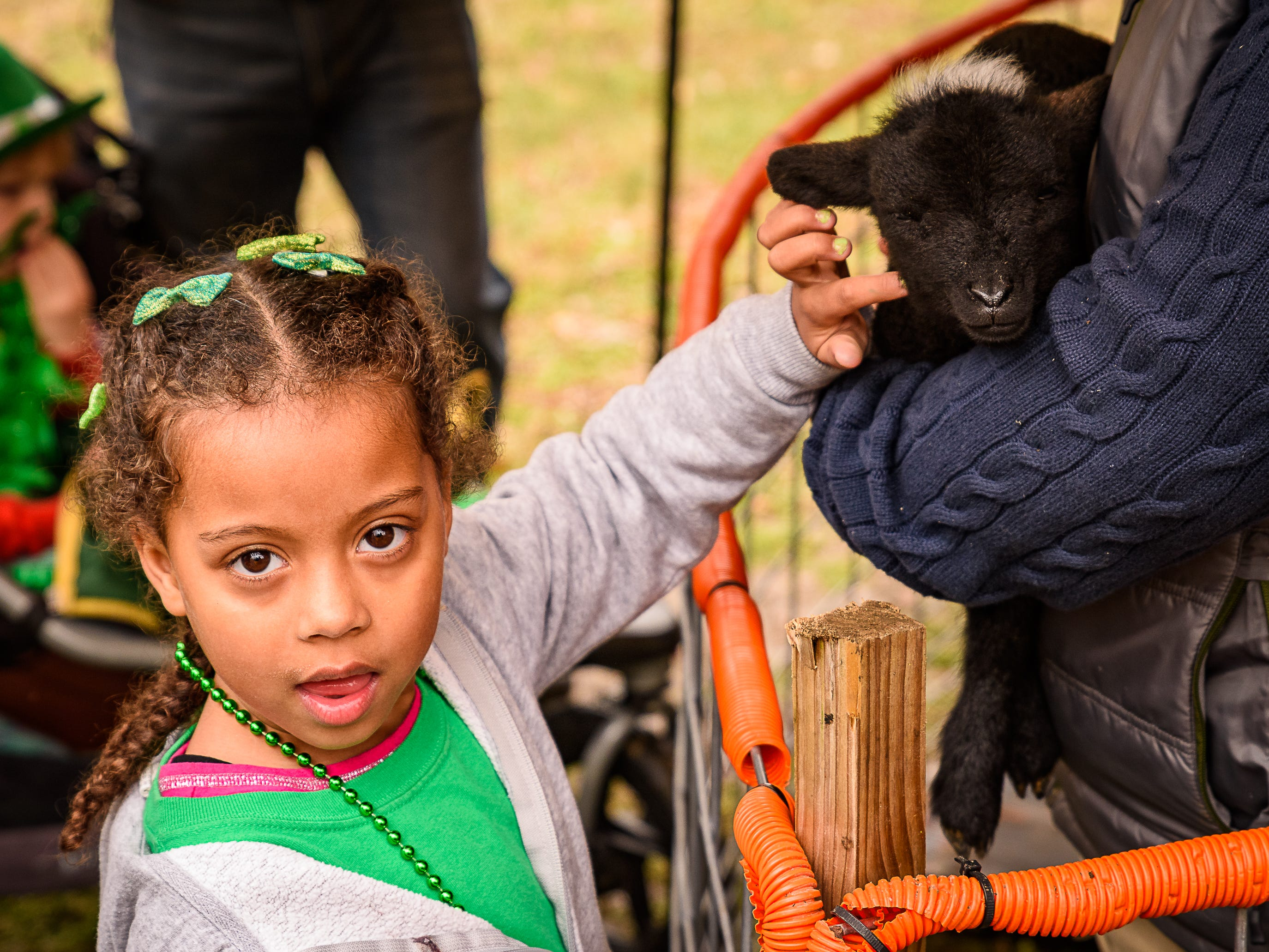 A young girls pets a baby goat that was  on display at the Celtic Festival in Onancock.