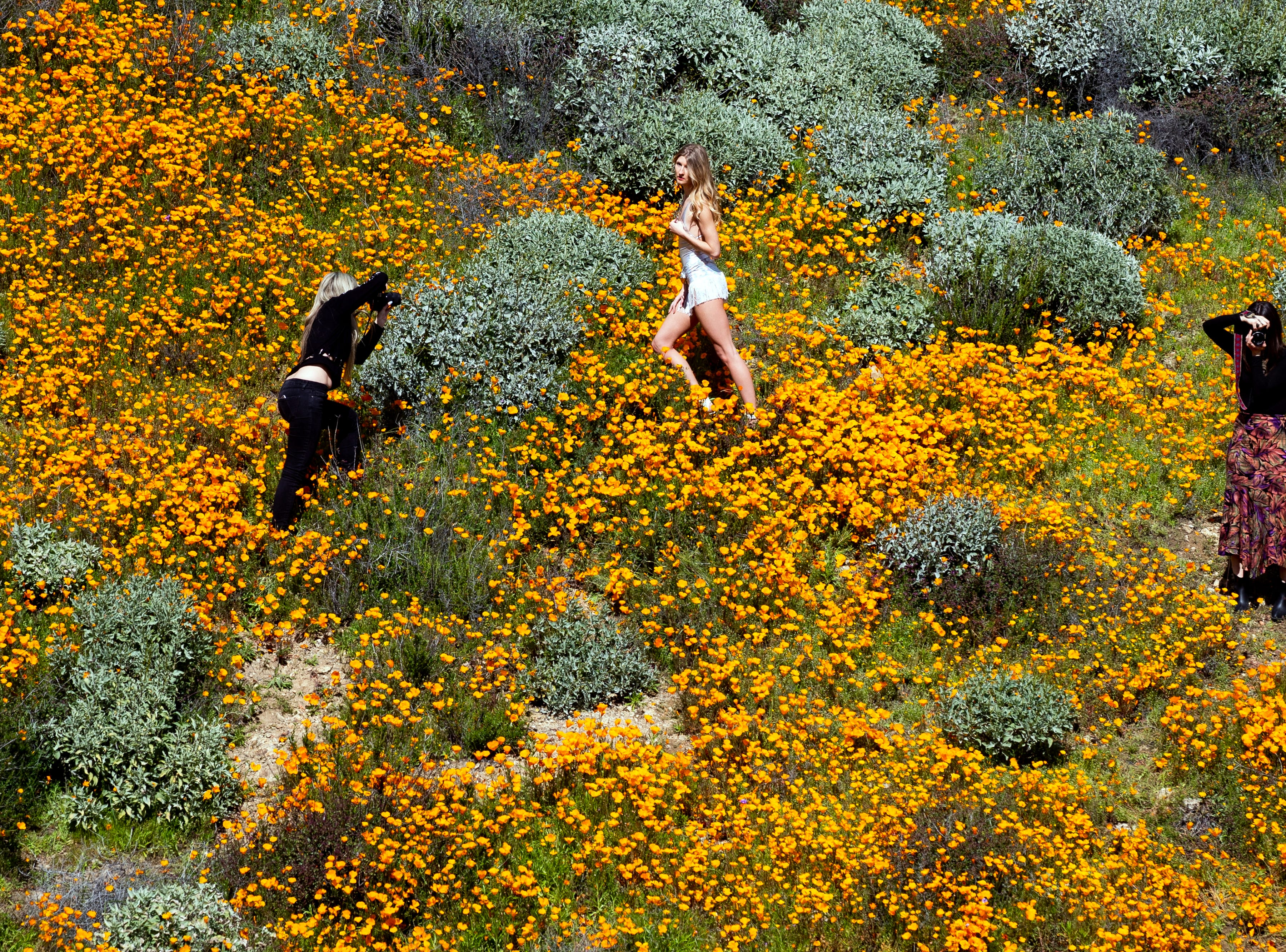 Girls take 'fashion' pictures of each other in the middle of a poppy fields on a slop of Walker Canyon near Lake Elsinore, Calif. March 8, 2019.