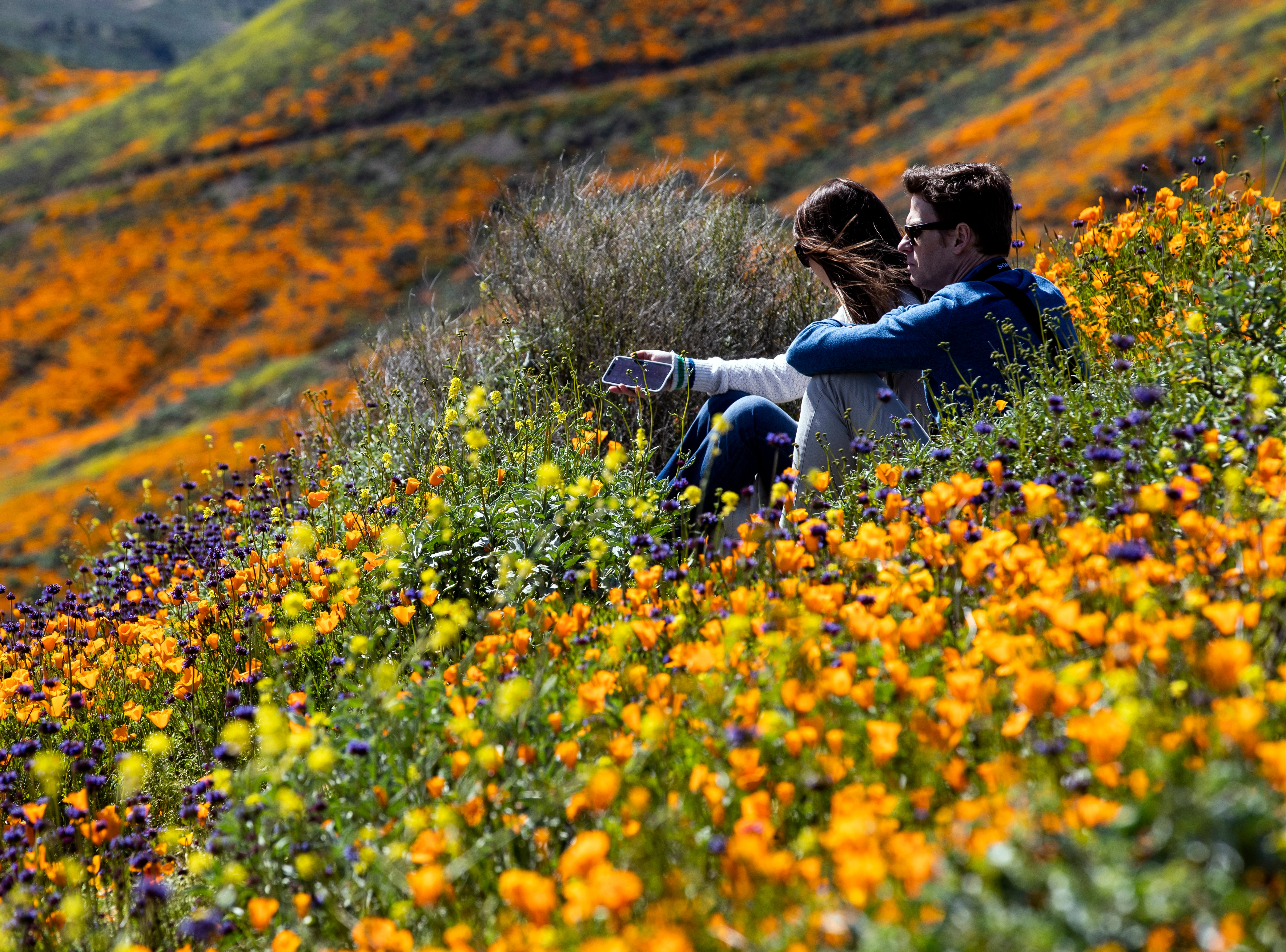 epa07424024 A couple sits on a slop in the middle of a poppy fields the slops of Walker Canyon near Lake Elsinore, California, USA, 08 March 2019. The heavy rains in California have boosted the growth of wild desert flowers, an occurrence called super bloom.  EPA-EFE/ETIENNE LAURENT ORG XMIT: ELAU4359