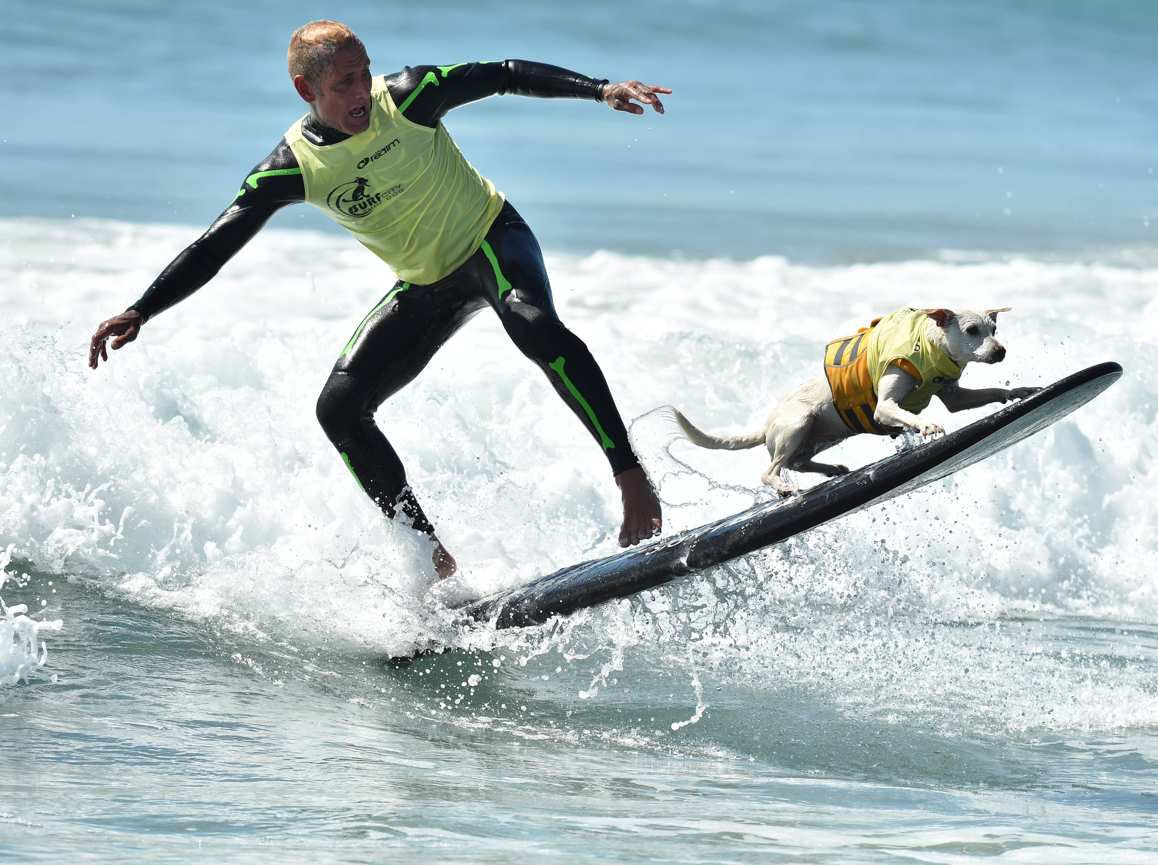 HUNTINGTON BEACH, CA - SEPTEMBER 29:  Sugar the Surfing Dog and Ryan Rustan compete in the 10th Annual Surf City Surf Dog competition on September 29, 2018 in Huntington Beach, California.  (Photo by Axelle/Bauer-Griffin/FilmMagic) ORG XMIT: 775218625 ORIG FILE ID: 1043271174