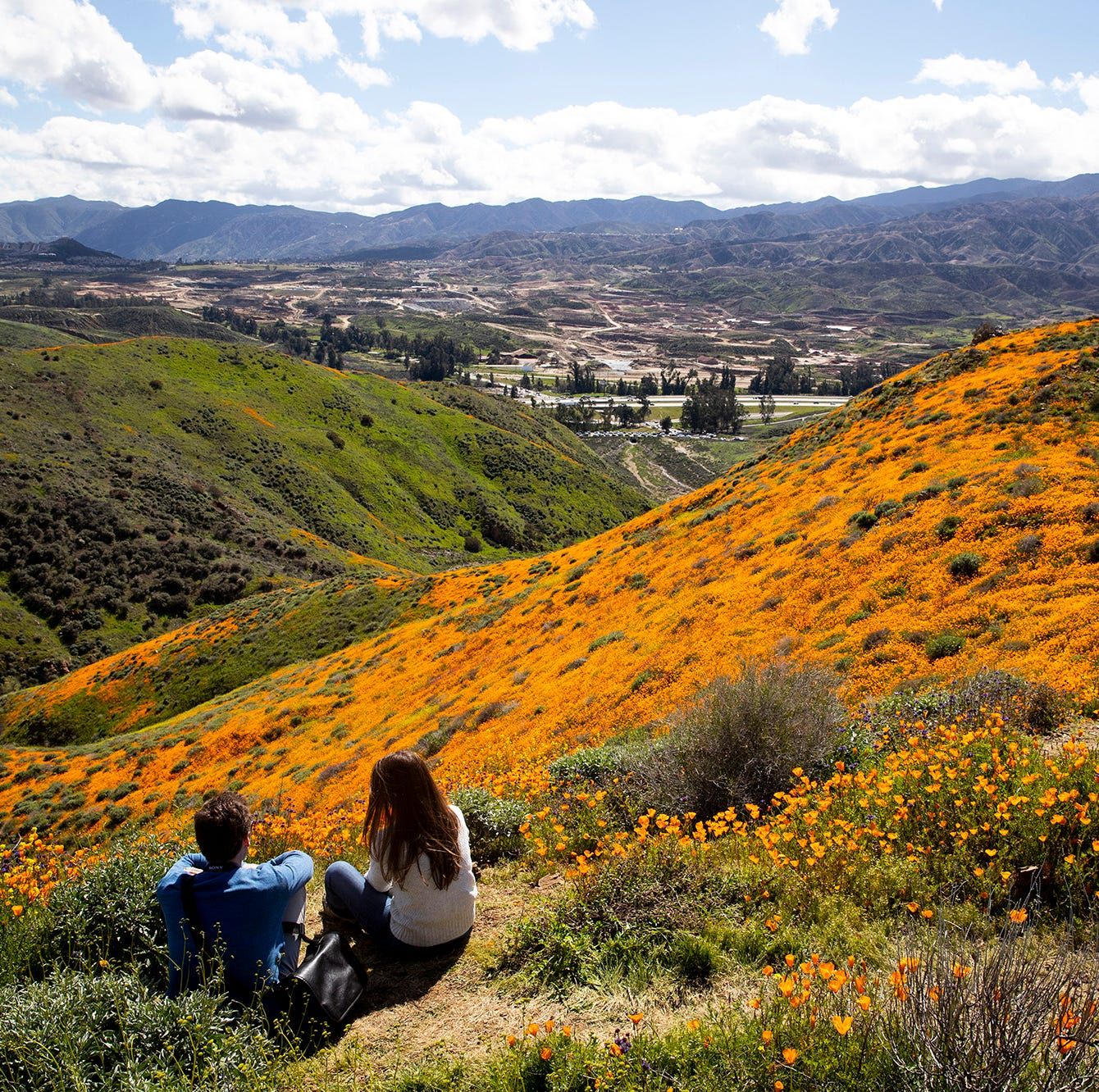 Poppy fields are blooming on the slops of Walker Canyon near Lake Elsinore, Calif.  March 8, 2019.